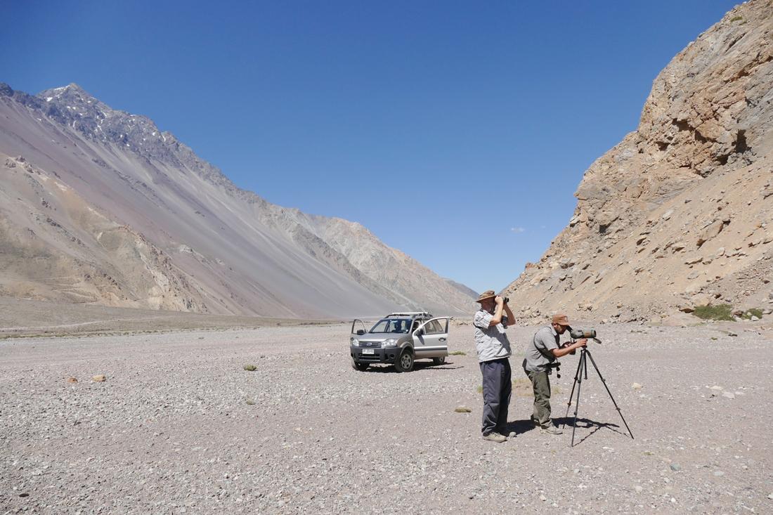 Fred Homer (left) and Fernando Diaz Segovia birding in the El Yeso Valley. Noah Strycker