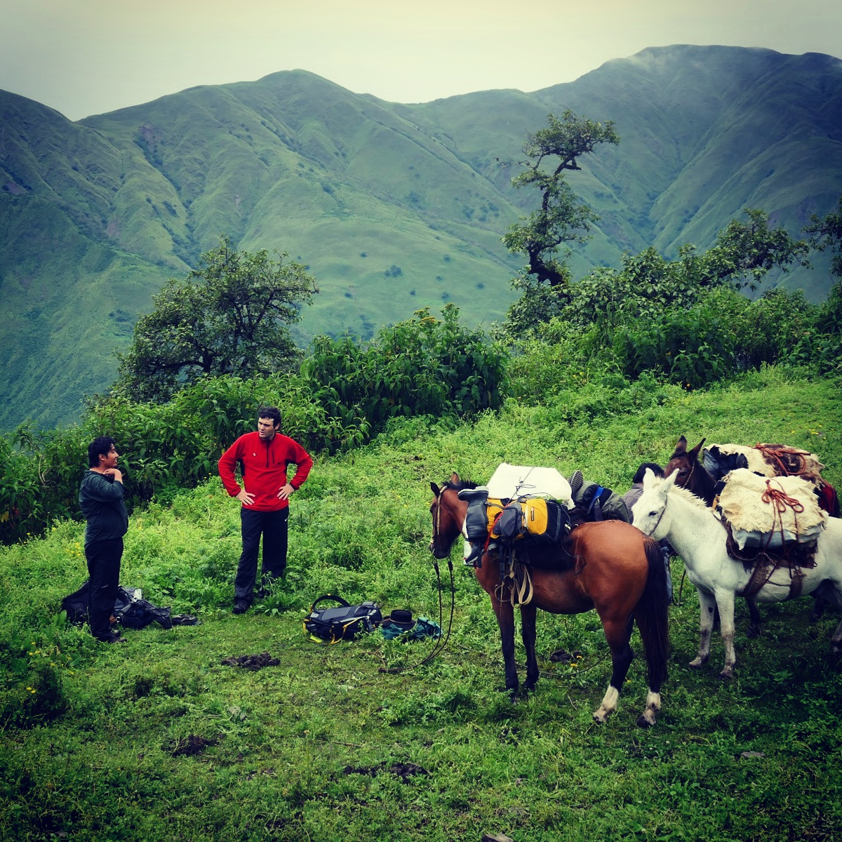 Freddy and Fabri with the pack mules, ready to set up camp for the afternoon in Cerro Negro. Noah Strycker