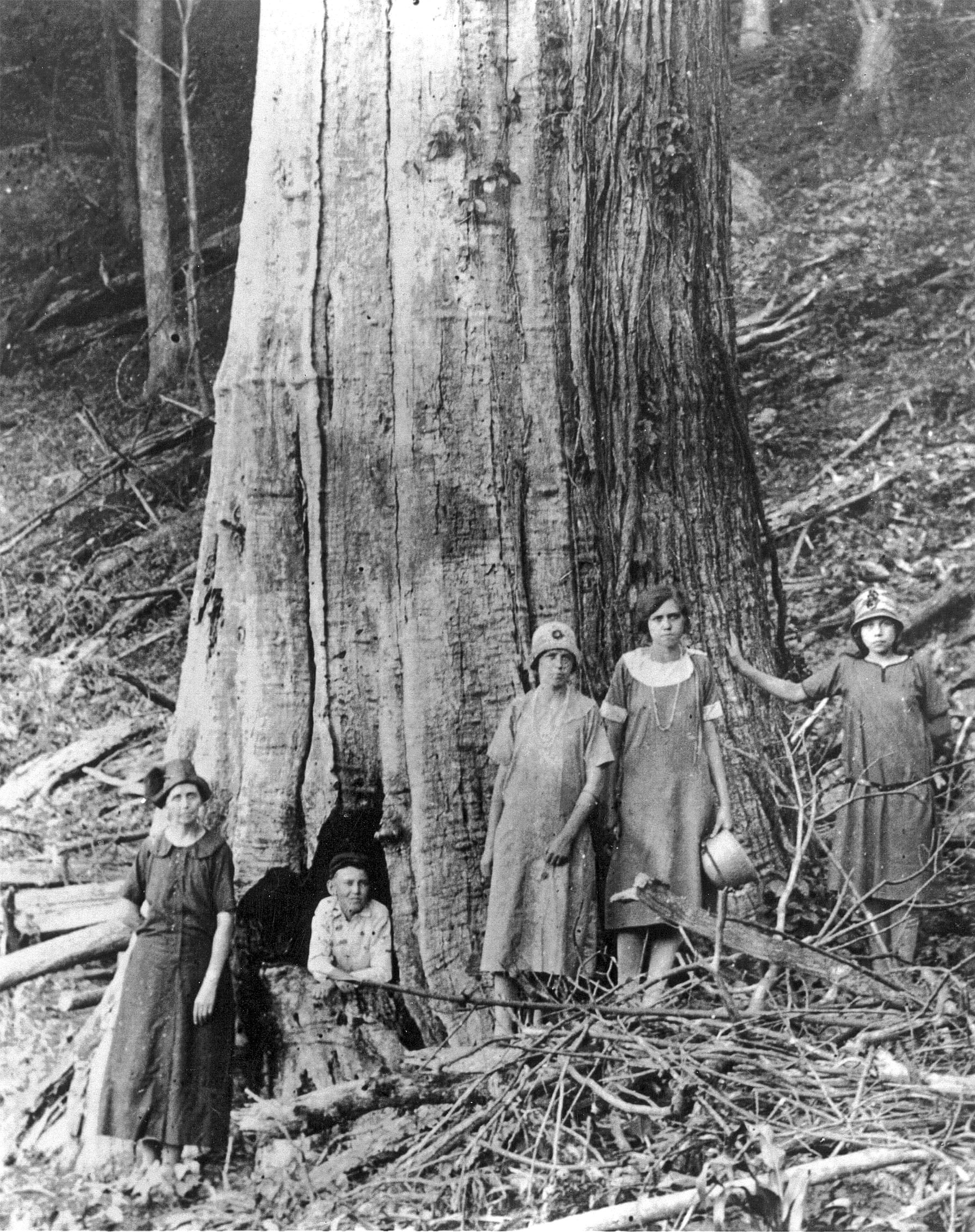 A blight-killed American chestnut in Tennessee, 1920. Great Smoky Mountains National Park