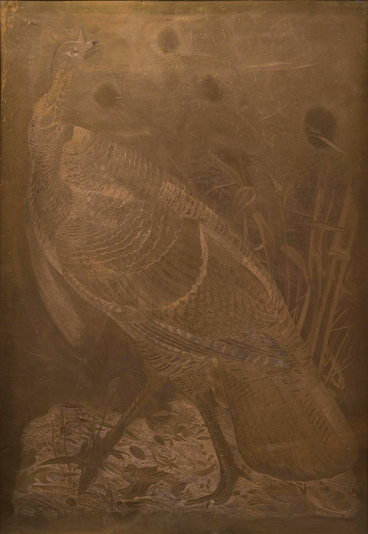 The copper plate of the Wild Turkey, used for the elephant-folio reproductions in the 1826-27. American Museum of Natural History Library,  Gift of Cleveland E. Dodge.