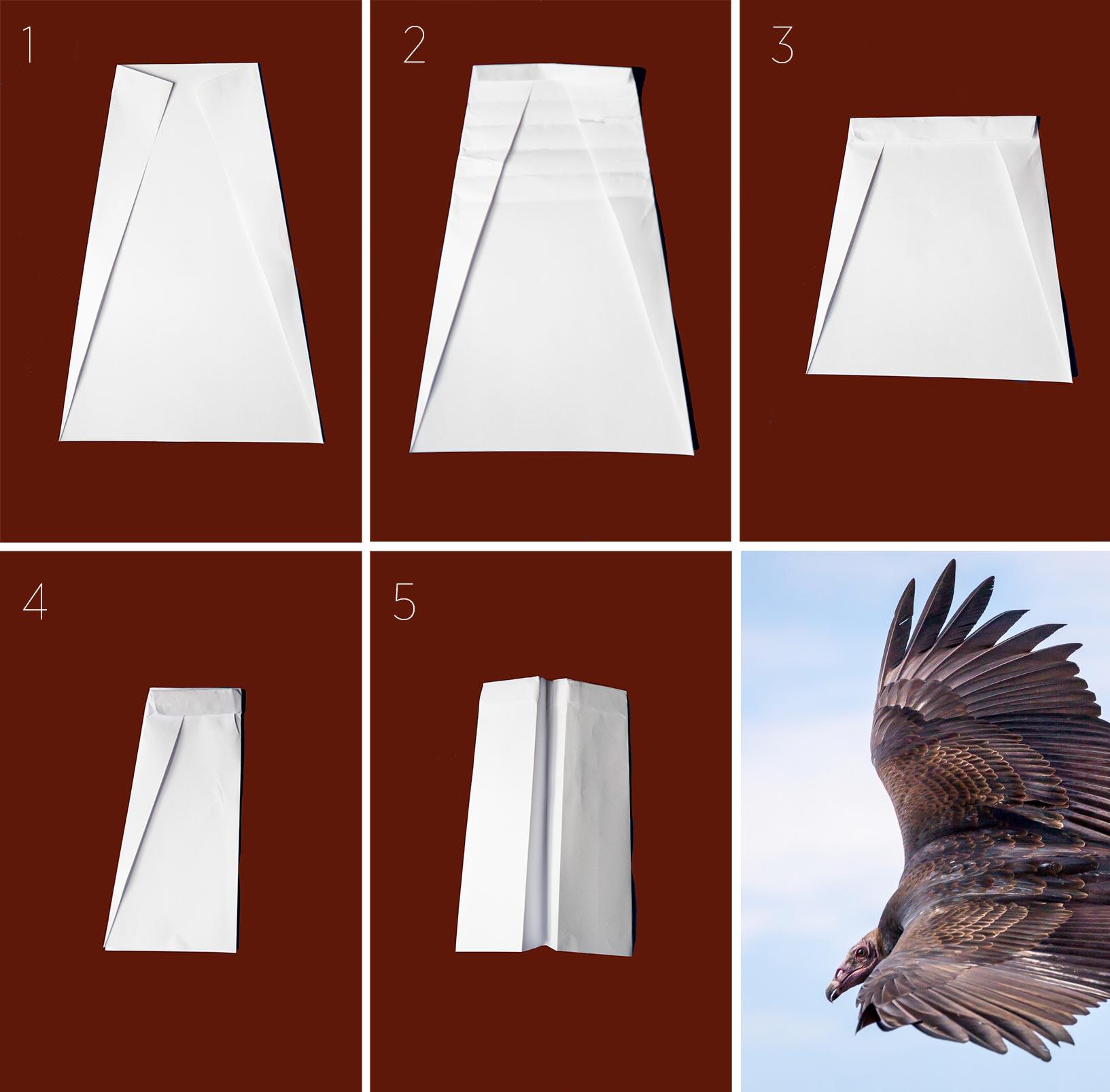 Direcciones para doblar un Zopilote de Aura de papel. Todos los fotos de los aviones de papel: Camilla Cerea/Audubon. Zopilote de Aura. Foto: John Comisky/Premios de Fotografía Audubon.
