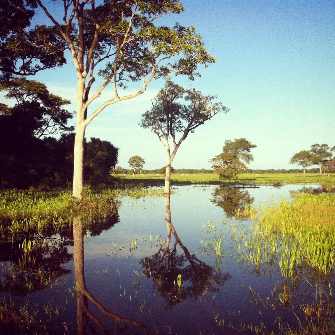The Pantanal is a patchwork of flooded areas and savannah-like forest. Noah Strycker
