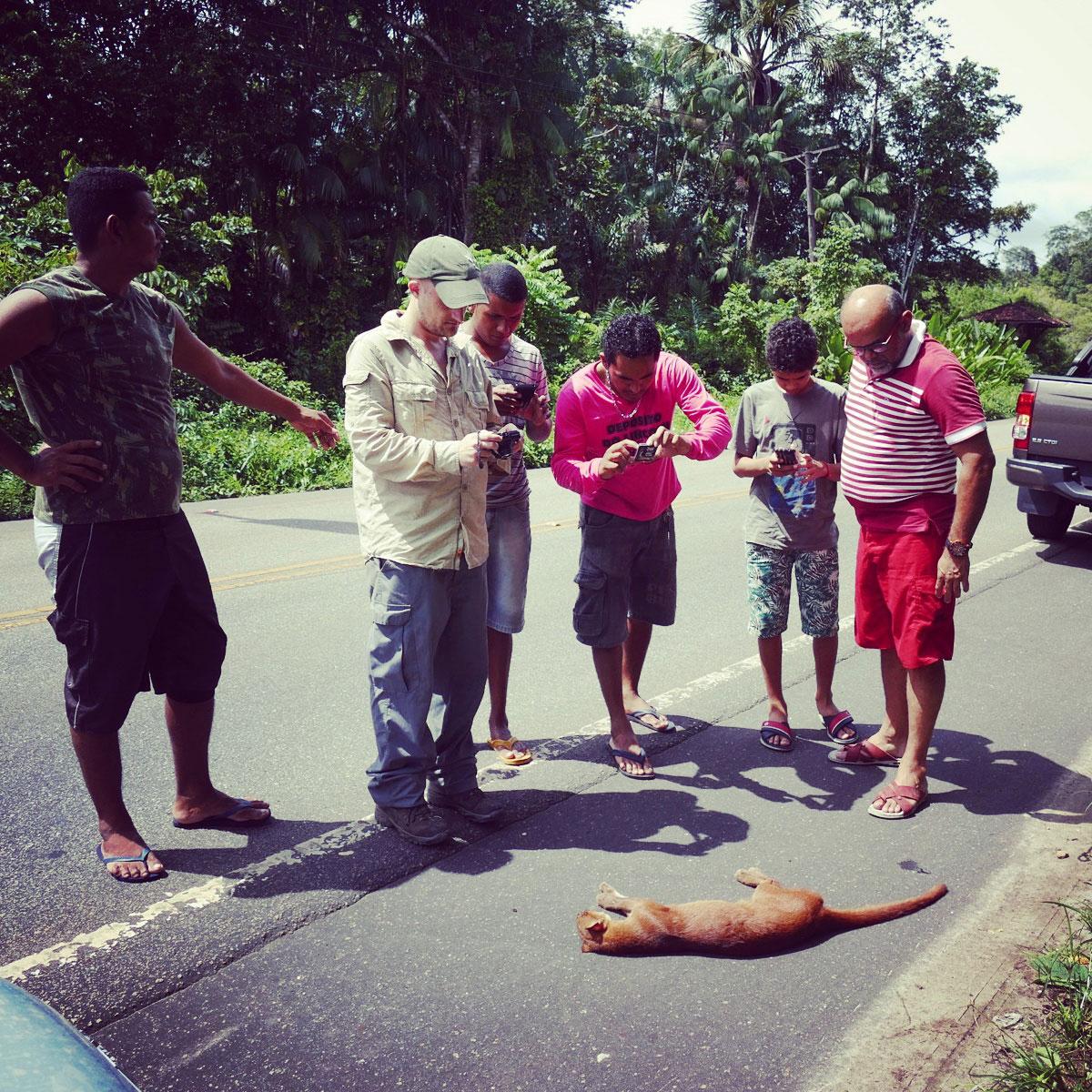 A crowd gathers around the deceased jaguarundi near Belem, Brazil. Noah Strycker