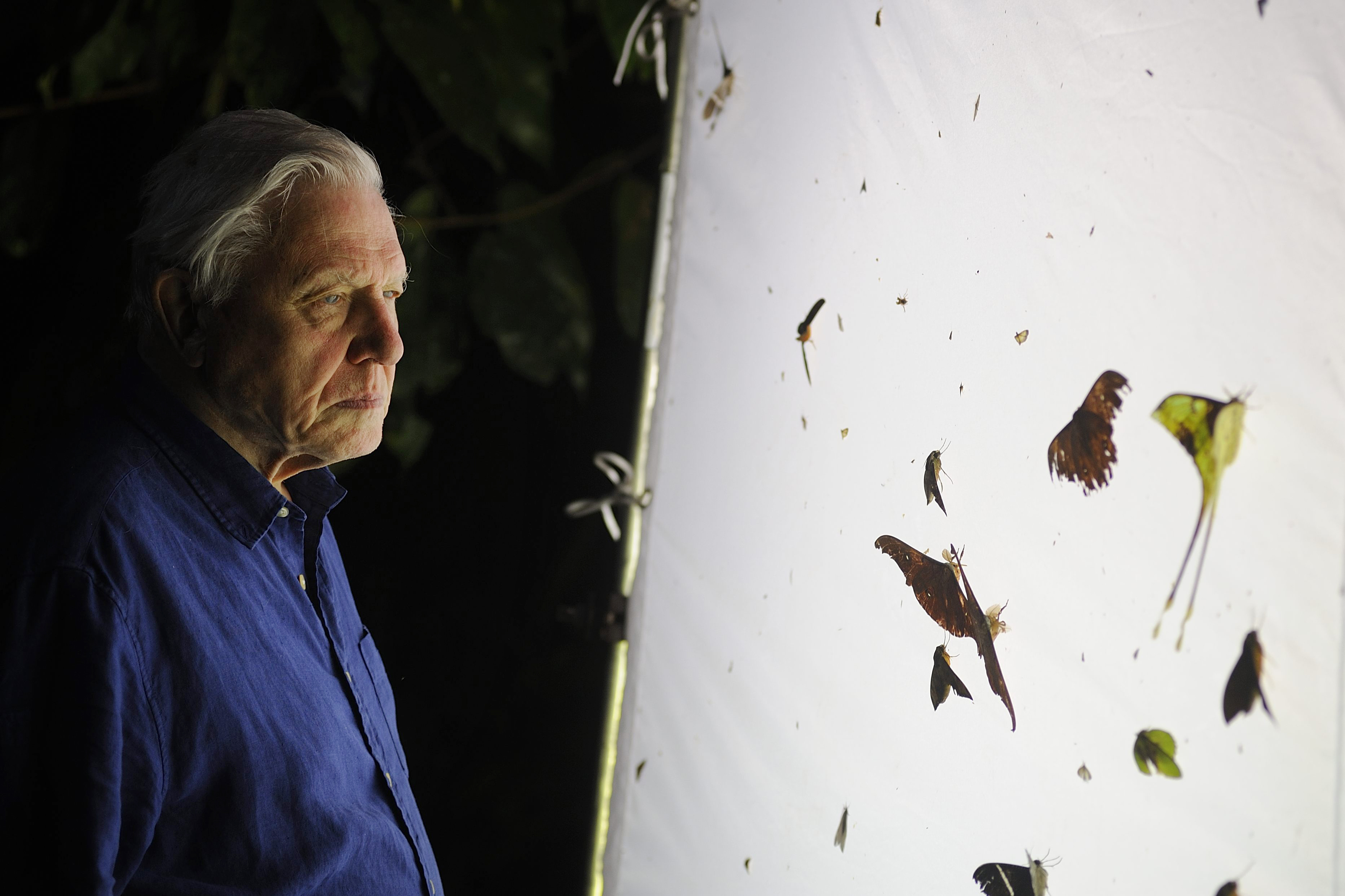 Attenborough examines nocturnal insects while on location in Borneo. Credit: Colossus Productions