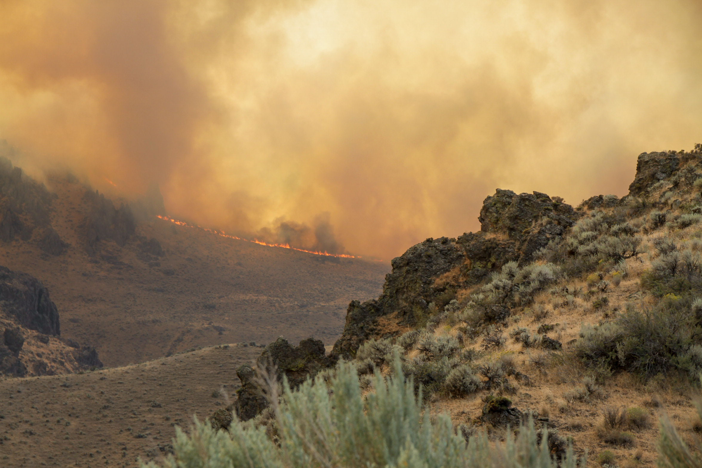 The 2015 Soda Fire burned nearly 280,000 acres in southwest Idaho and southeast Oregon, including nearly 200,000 acres of Greater Sage-Grouse habitat. BLM