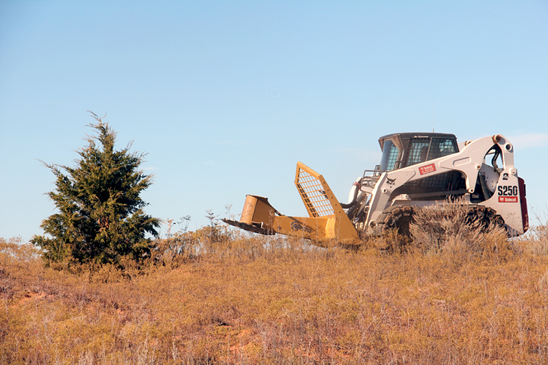 Removing shrubs, such as this eastern redcedar, improves habitat for the Lesser Prairie-Chicken. Ken Brunson/Lesser Prairie Chicken Initiative/Flickr (CC BY NC ND 2.0)