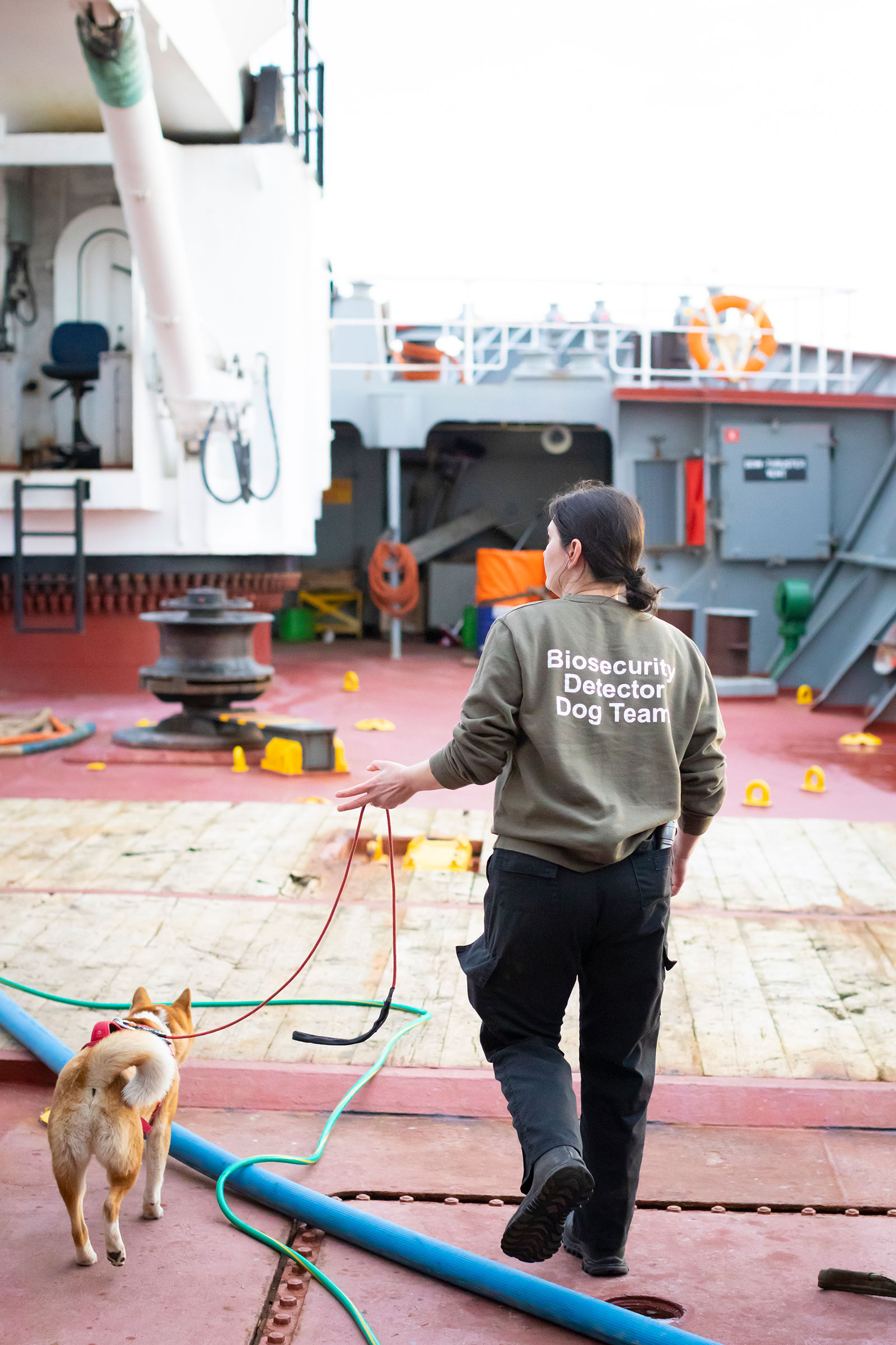 """A woman with dark hair, black pants, and a brown shirt that says """"biosecurity detector dog team"""" holds a red leash attached to a brown and white dog. They walk across the cluttered red deck of a ship."""