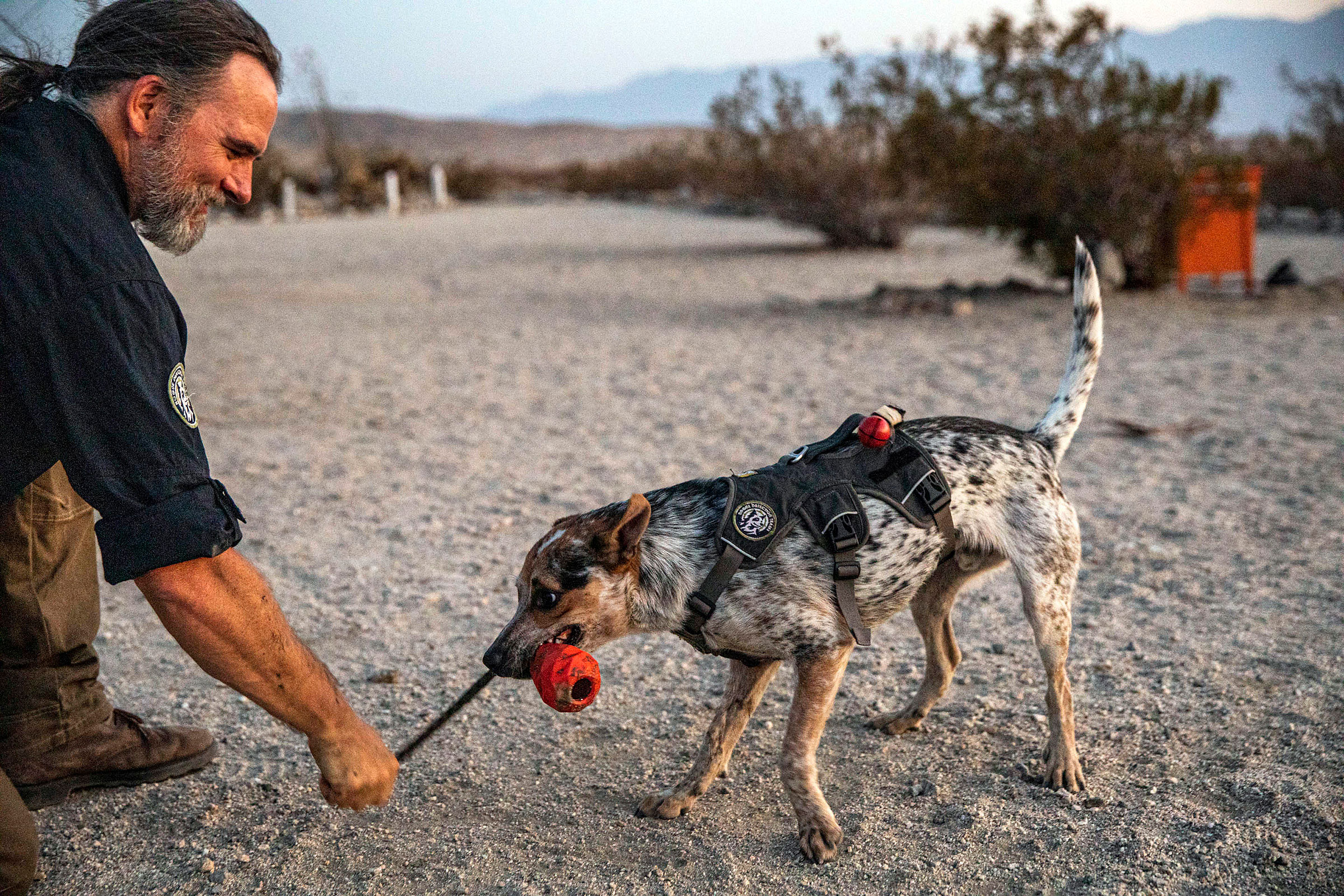 A smiling man in a dark shirt crouches in a desert landscape and plays with a dog with mottled white, gray, and brown fur. The dog is wearing a black harness and pulling with its teeth on a red toy attached to a rope. The man holds the rope in one hand.