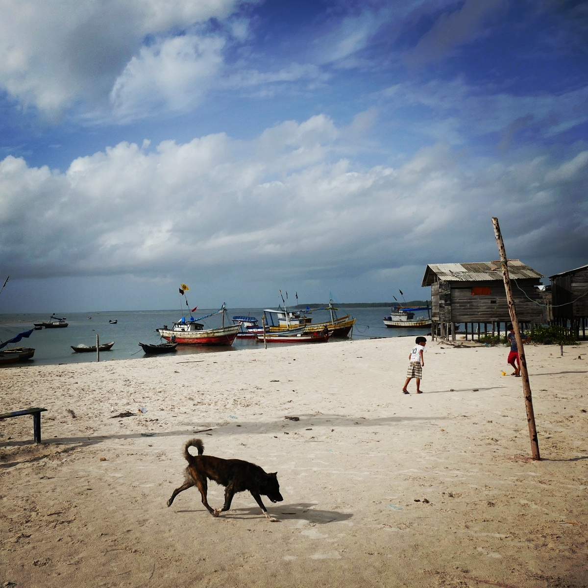 View from the beach in northern Brazil. Noah Strycker