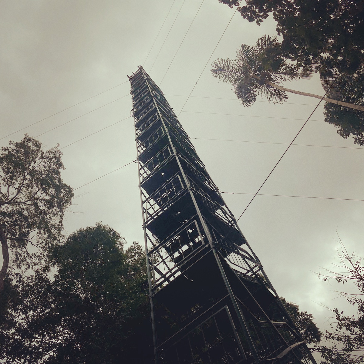 The canopy tower at Pousada Amazonas soars 190 feet above the forest, Peru. Noah Strycker