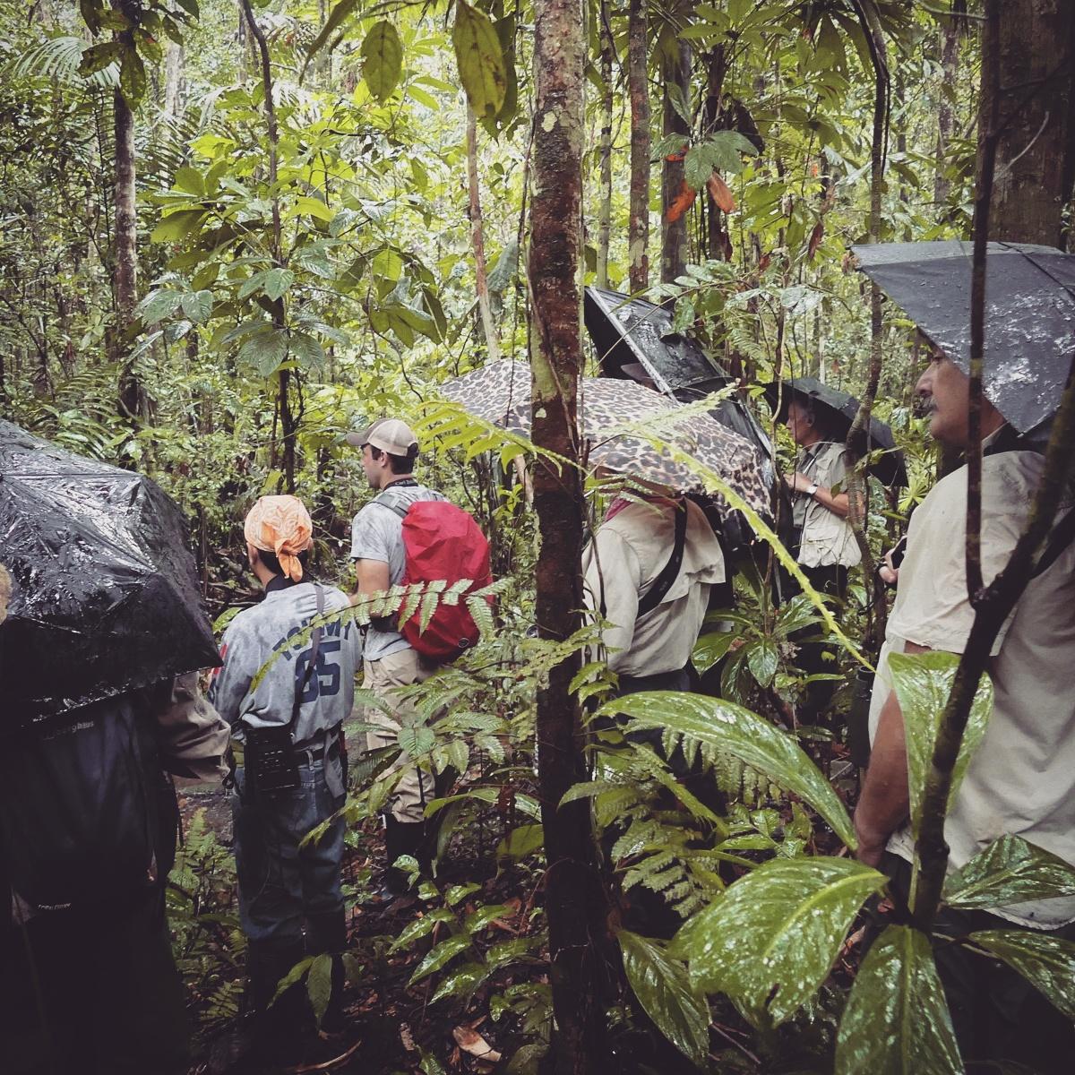 Birding under umbrellas in the forest at Shiripuno Lodge, Ecuador. Noah Strycker