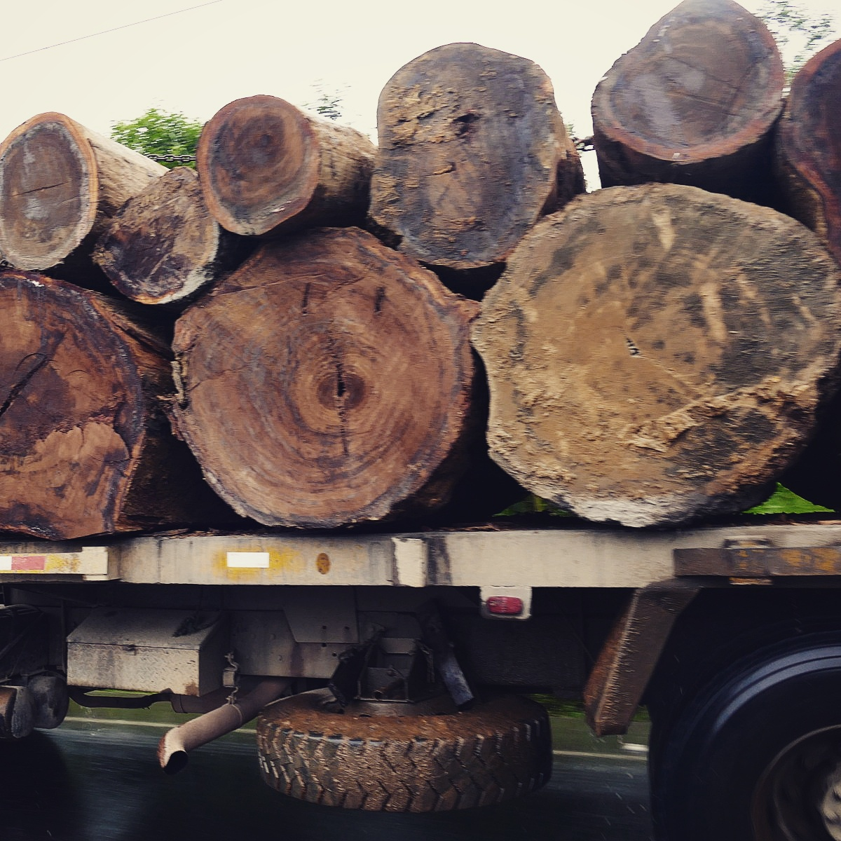 A load of logs leaves the Choco lowlands of northwest Ecuador. Noah Strycker
