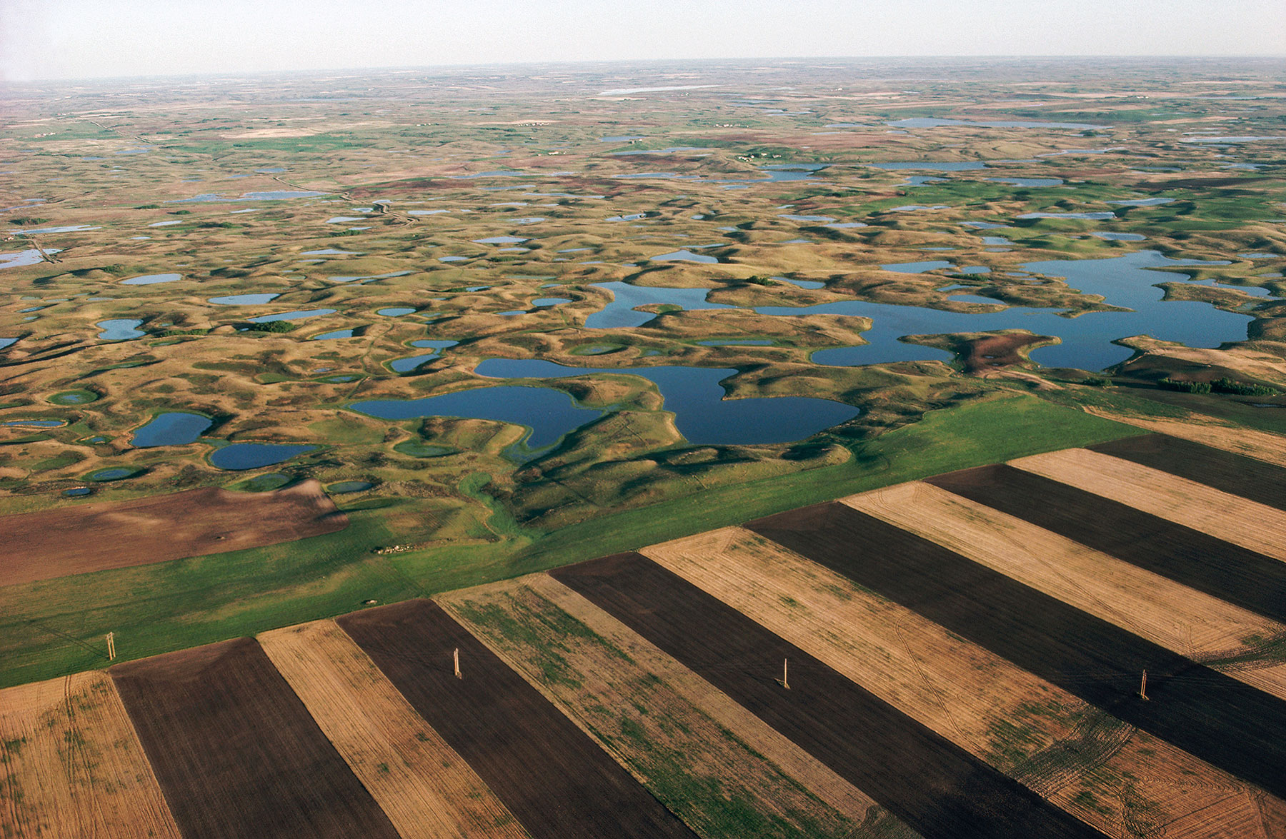 Croplands have long been claiming North Dakota's prairie potholes. The state's current energy boom only adds to pressure on habitat. Photo Credit: Jim Brandenburg/Minden Pictures