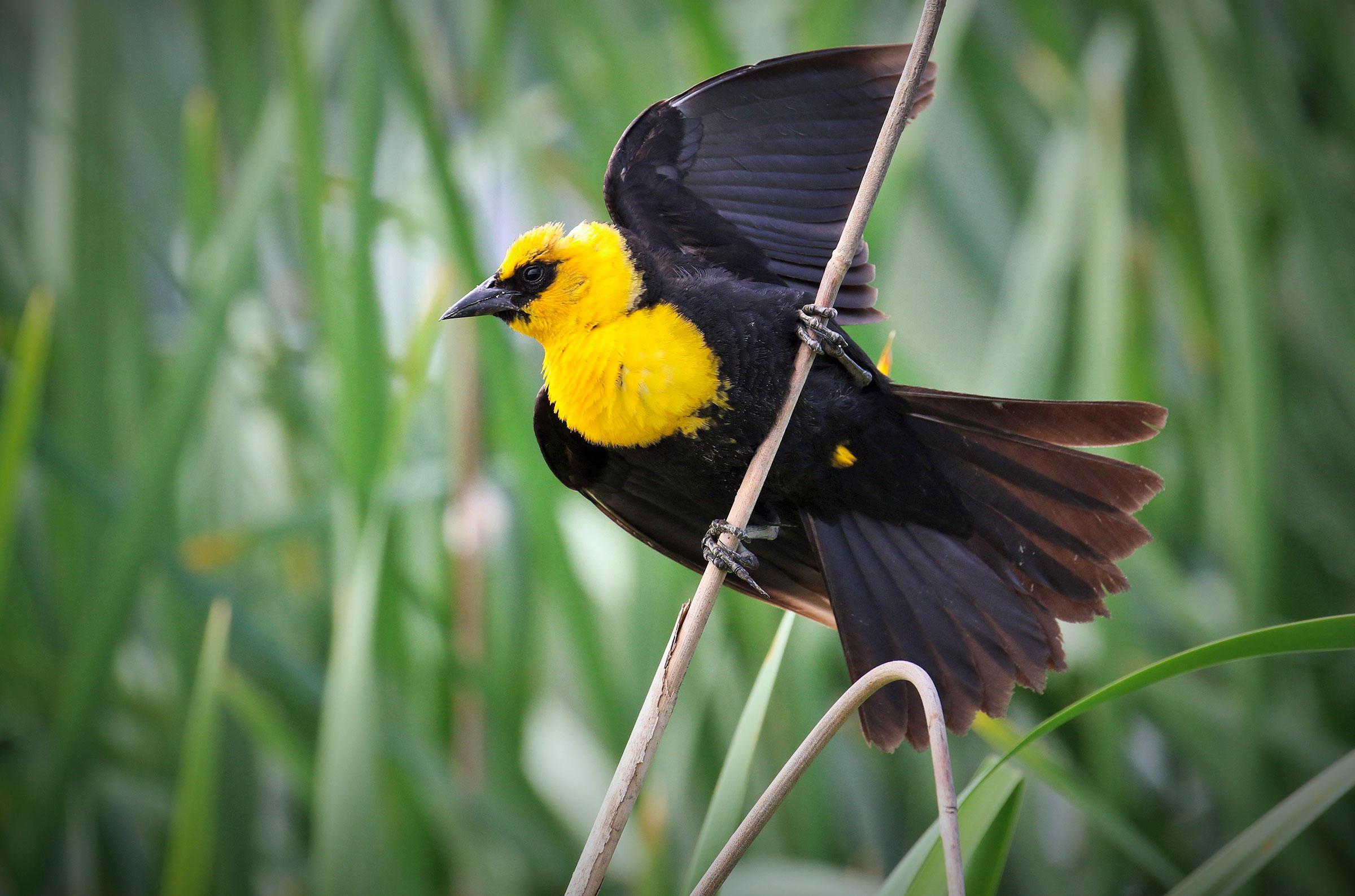 целом фото желто черных птиц в краснодарском крае талия оказалась