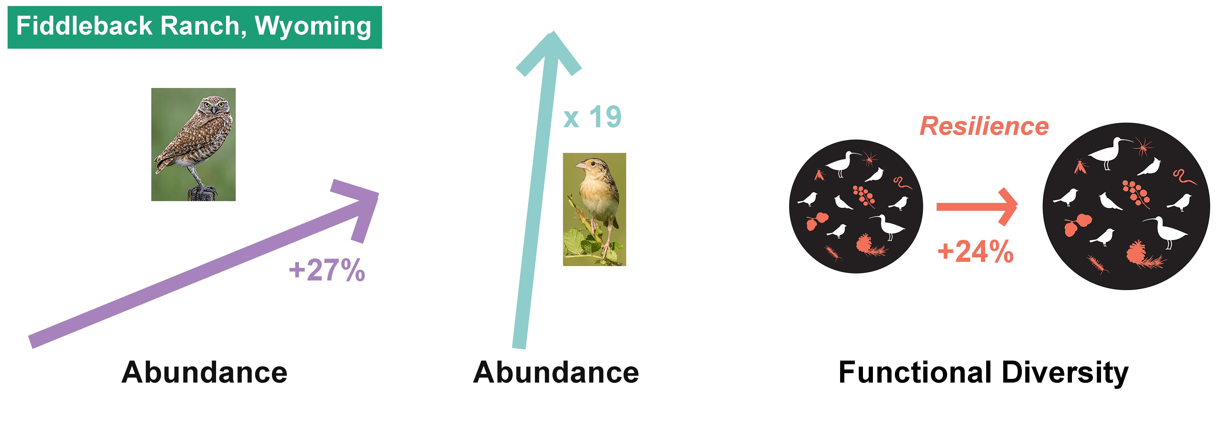 Photos from left: Burrowing Owl, Brad Lewis/Audubon Photography Awards; Grasshopper Sparrow, Susan Ward/Audubon Photography Awards