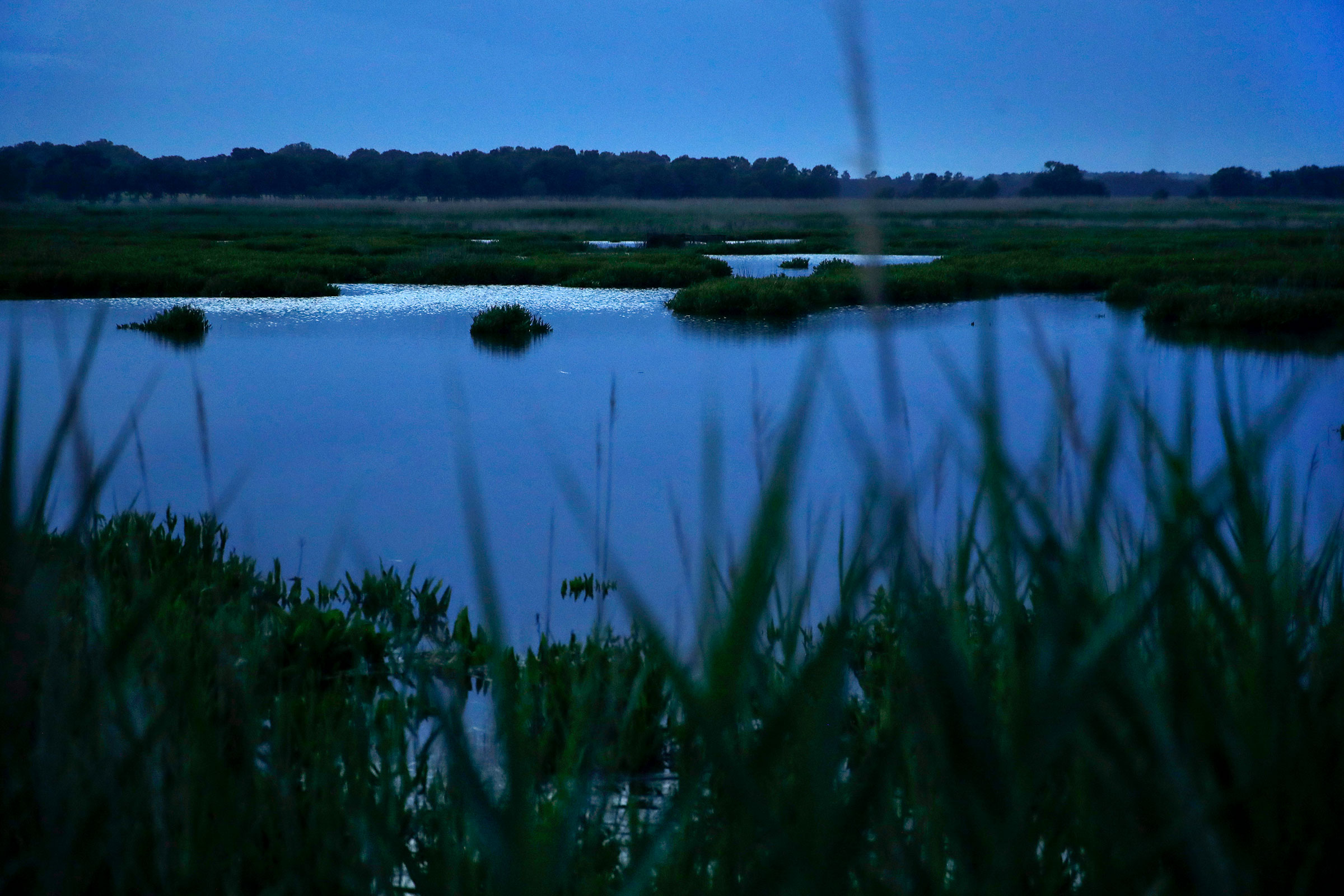 Wetlands along the Choptank River, Maryland. The Choptank and other waterways on Maryland's Eastern Shore played crucial roles in the Underground Railroad, both for transportation and as conduits of information. Patrick Semansky/AP