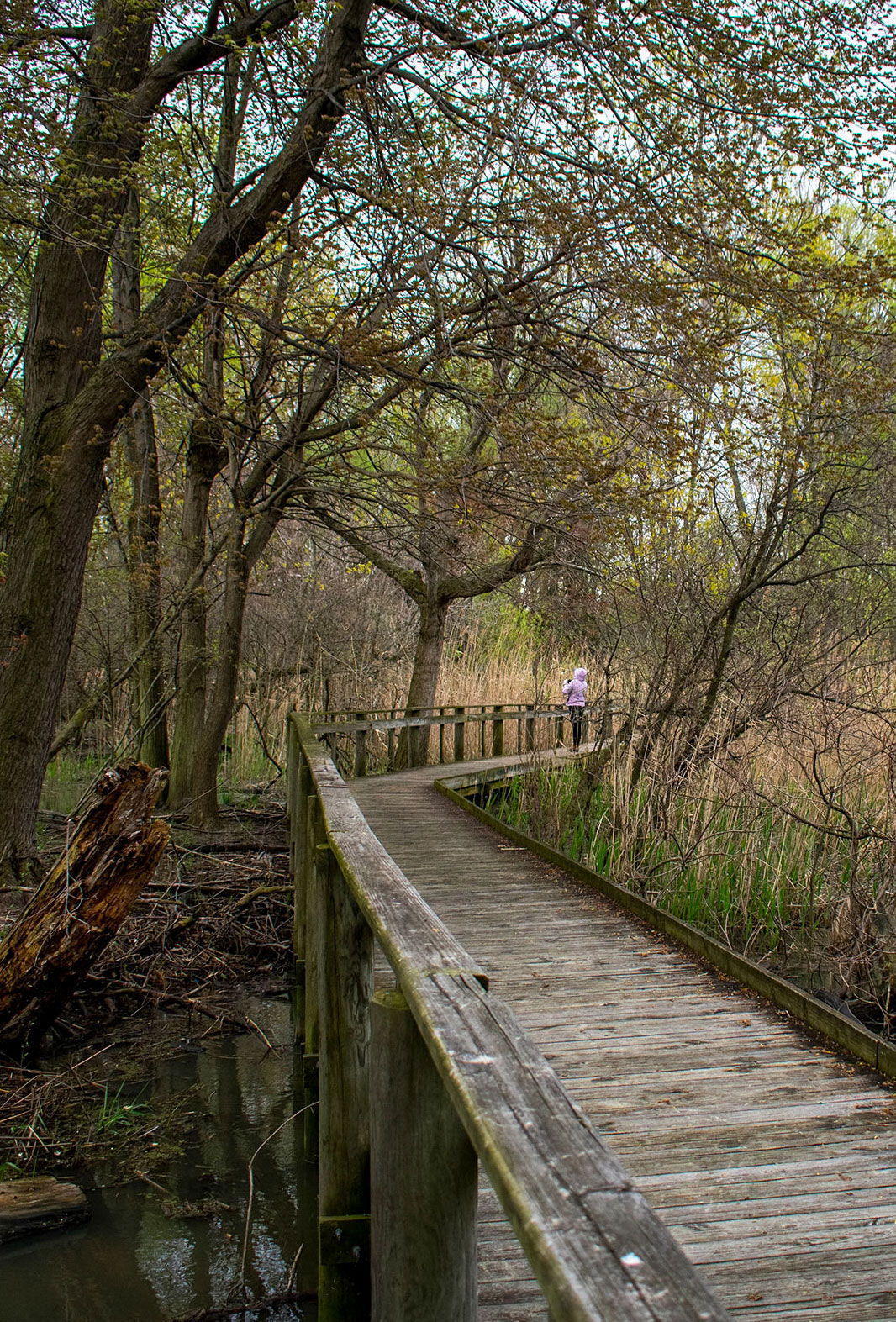 The boardwalk at Maumee Bay State Park, one of several locations birders can visit during the the Biggest Week in American Birding. Lia Bocchiaro/Audubon