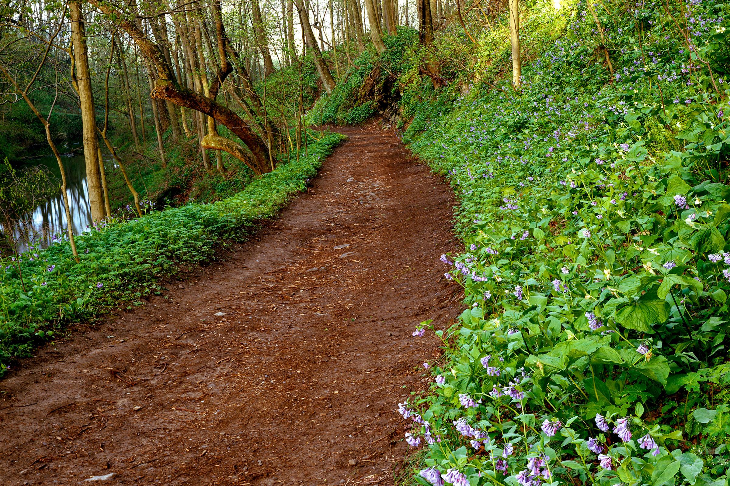Shenks Ferry Wildflower Preserve. H. Mark Weidman/Alamy
