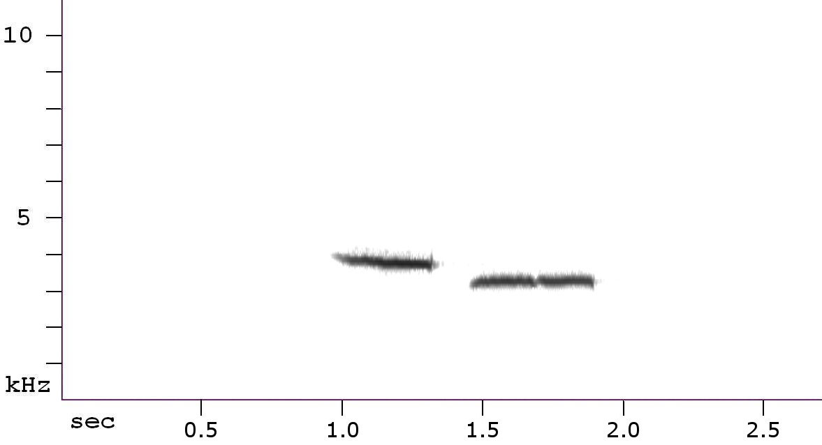 Black-capped Chickadee spectrogram. Courtesy of Nathan Pieplow