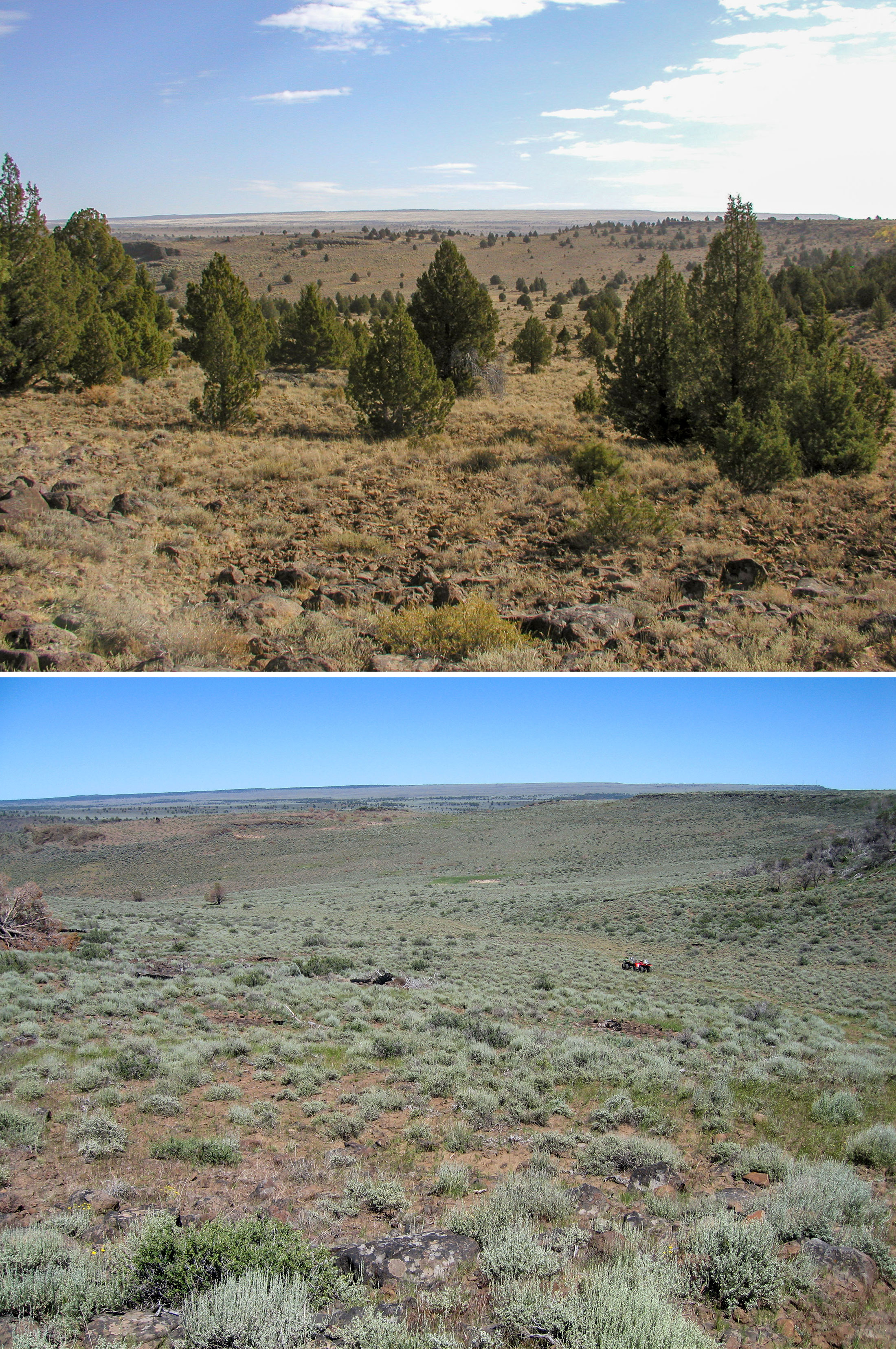 Before and after conifer removal in the treatment area in southern Oregon. Photos: Todd Forbes/BLM