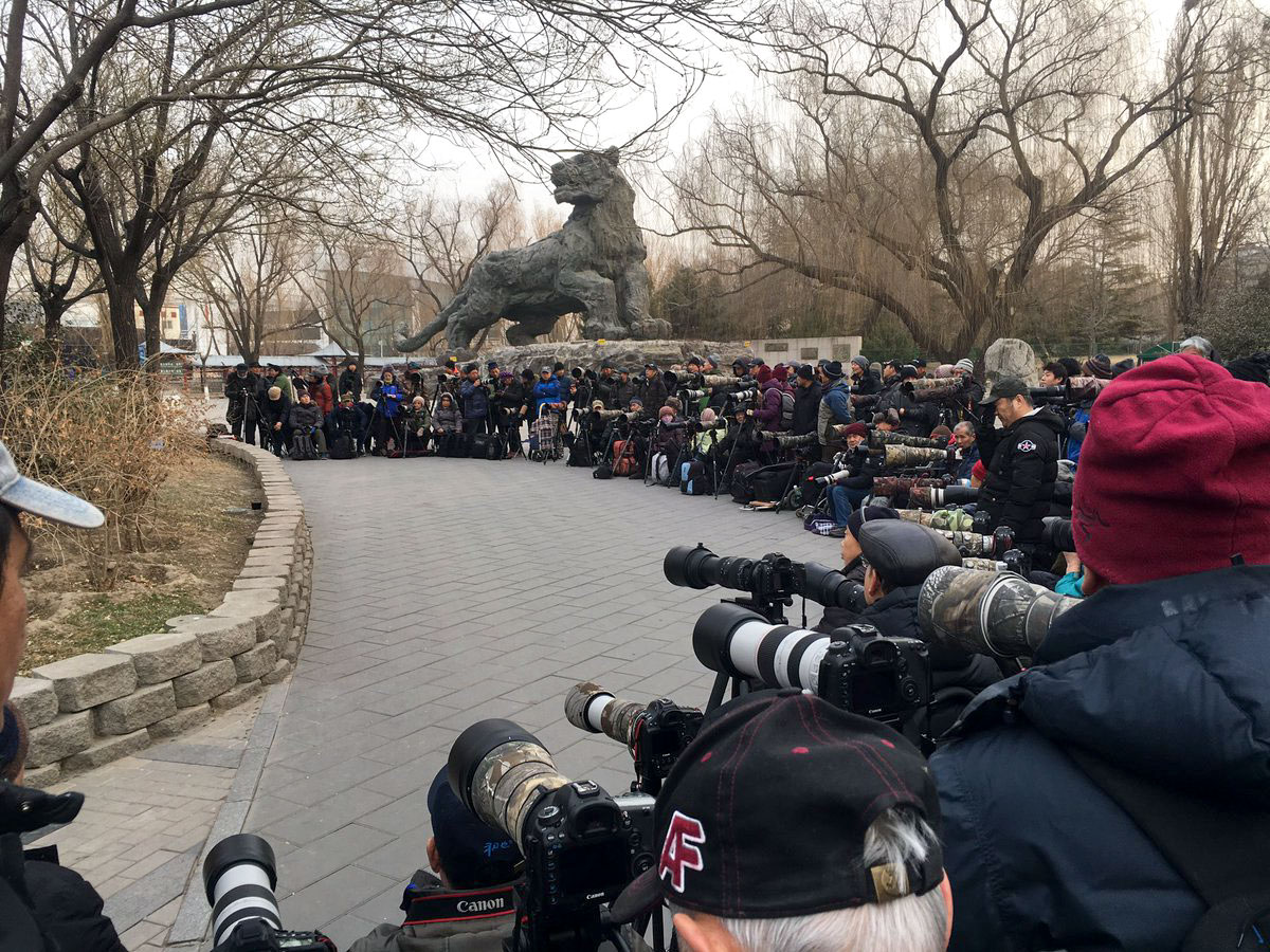 In just the past decade, China's birding scene has taken off, as evidenced by the camera-toting crowds flocking to catch a glimpse of the stray European Robin. Birding Beijing