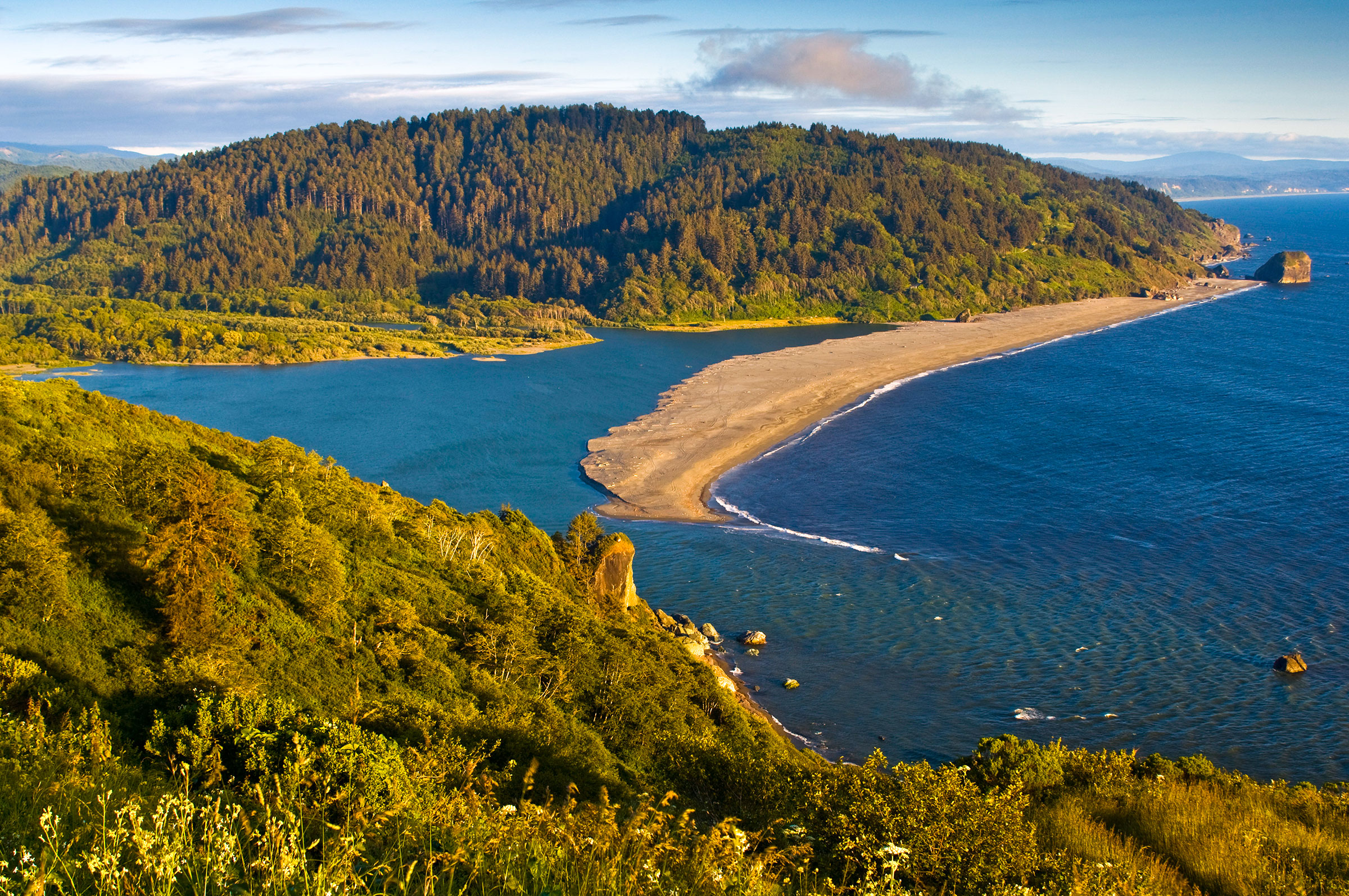 Scientists hired by the Yurok Tribe found that the Klamath River region, which includes Redwood National and State Parks, still provides suitable habitat and enough food to sustain a California Condor population. Gary Crabbe/Enlightened Images/Alamy
