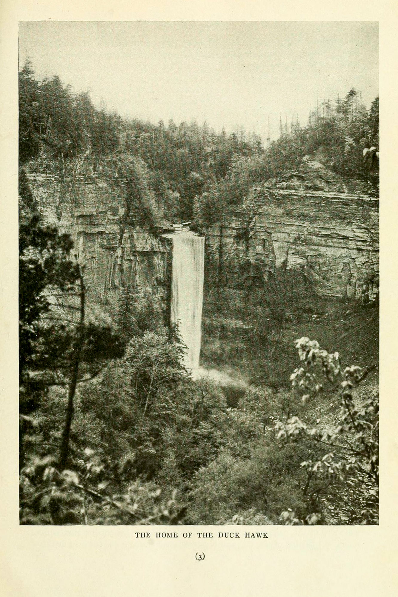 """Taughannock Falls pictured in """"The Duck Hawks of Taughannock Gorge"""" by Arthur A. Allen and H. K. Knight in a 1913 issue of Bird Lore magazine."""