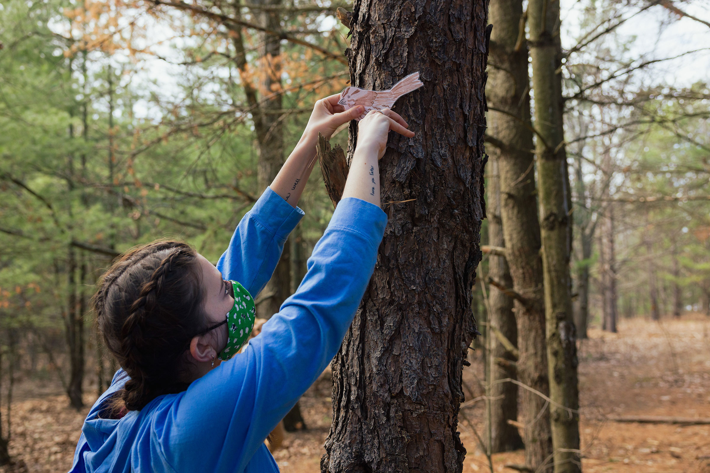 A University of Vermont student with brown hair and wearing a blue long-sleeved shirt reaches up the trunk of a big tree to attach a cut-out drawing of a bird as part of a scavenger hunt activity planned for Flynn Elementary School mentees.