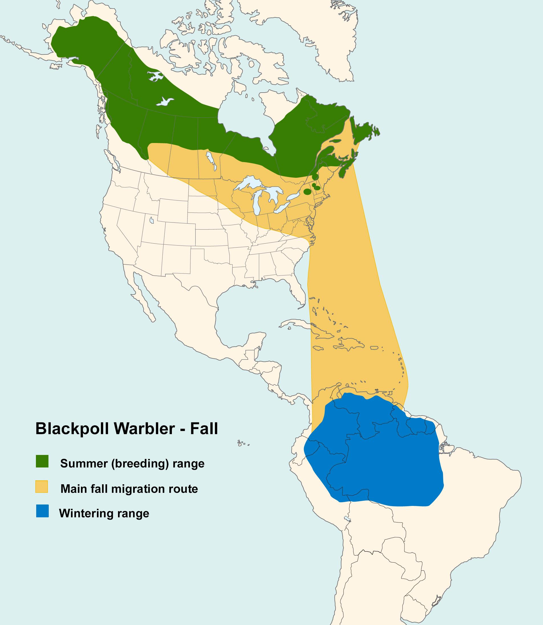 Mapa ilustrado que muestra los patrones de migración de la reinita negra en otoño.