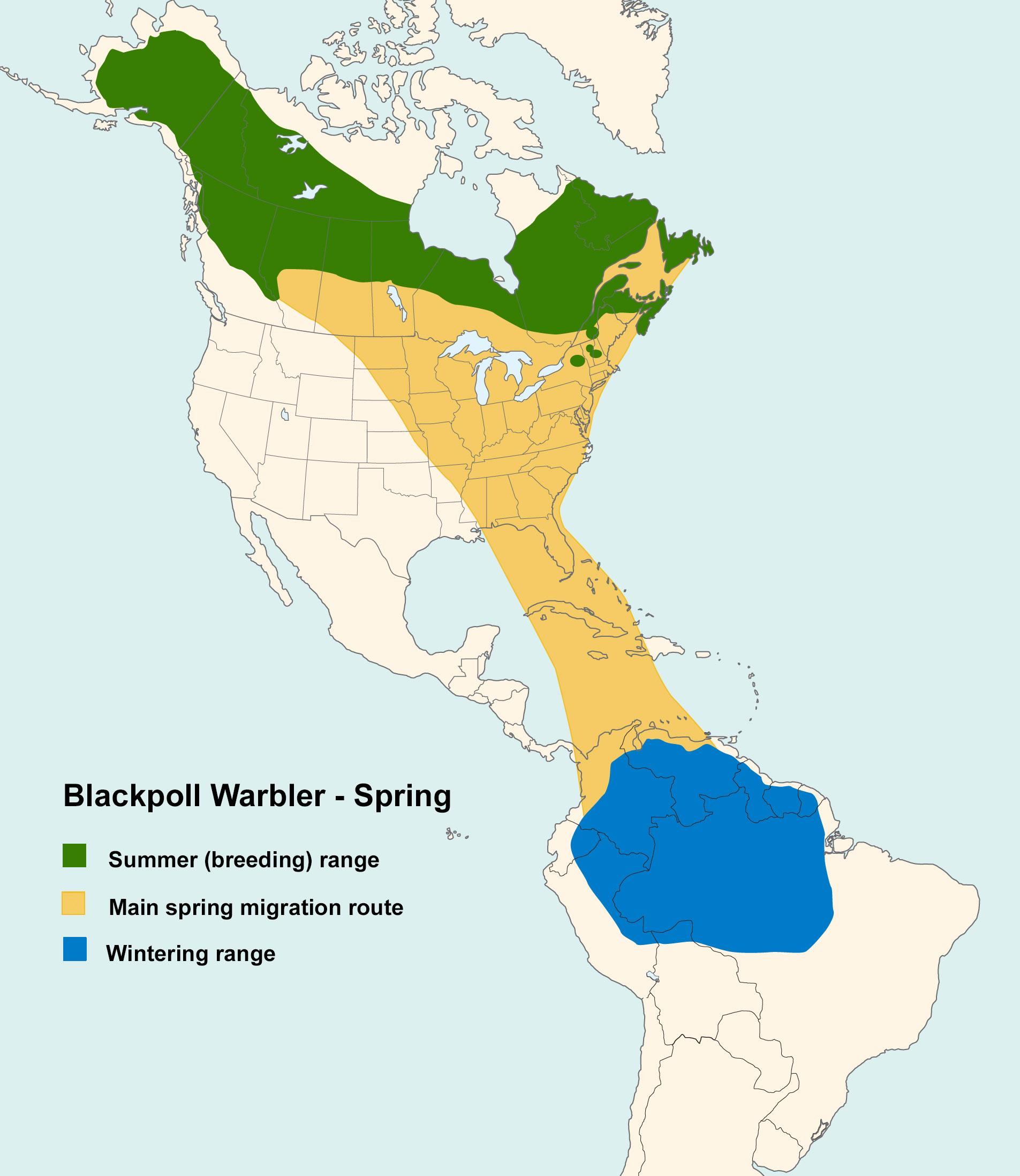 Mapa ilustrado que muestra los patrones de migración de la reinita negra en primavera.