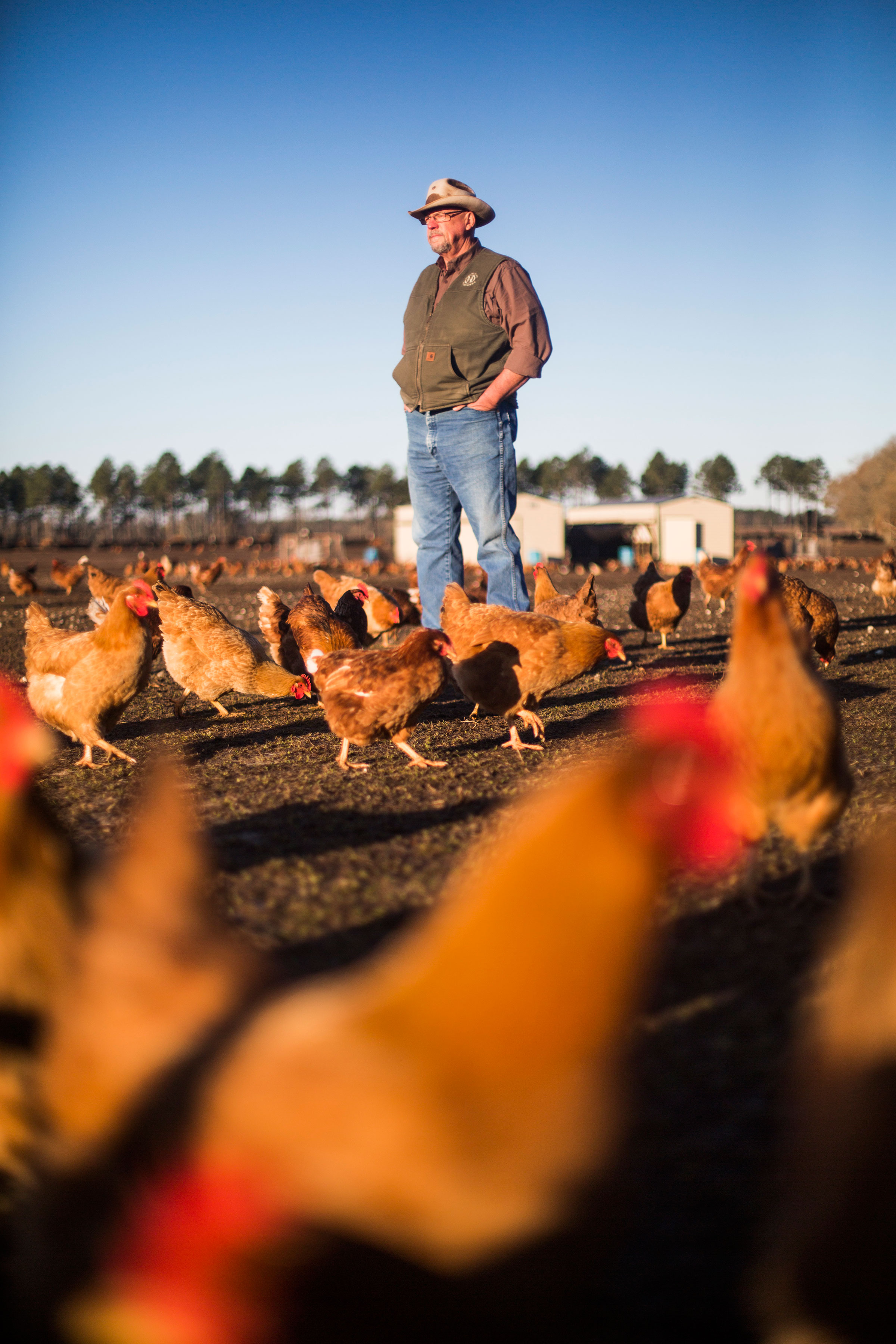 Six years ago, Will Harris decided to welcome chickens into his family's cattle business. A year later, the eagles began inviting themselves over. Bryan Meltz