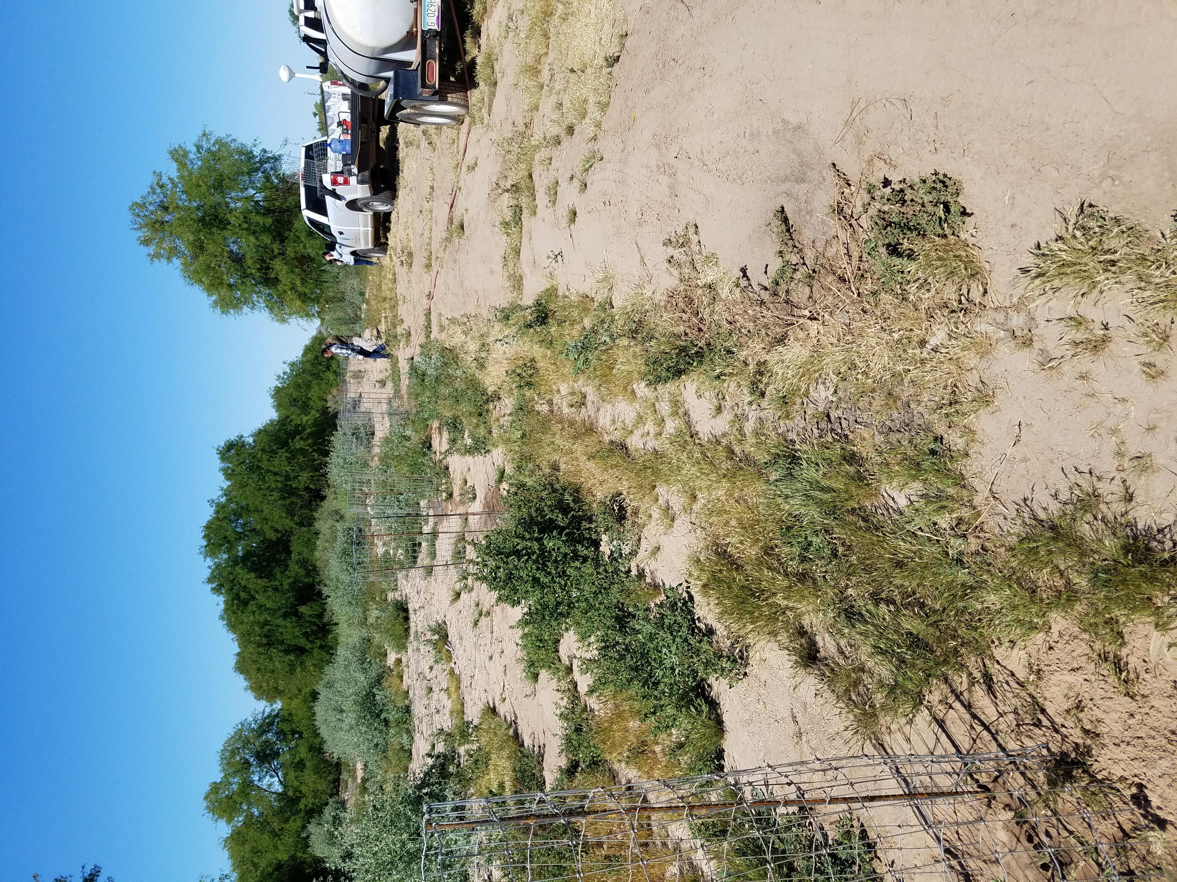 Un equipo de la Oficina de Protección Ambiental de Cocopah riega el sitio de restauración con un telón de fondo de bosque ribereño de álamos y sauces saludables. Foto: Sociedad Audubon de Yuma