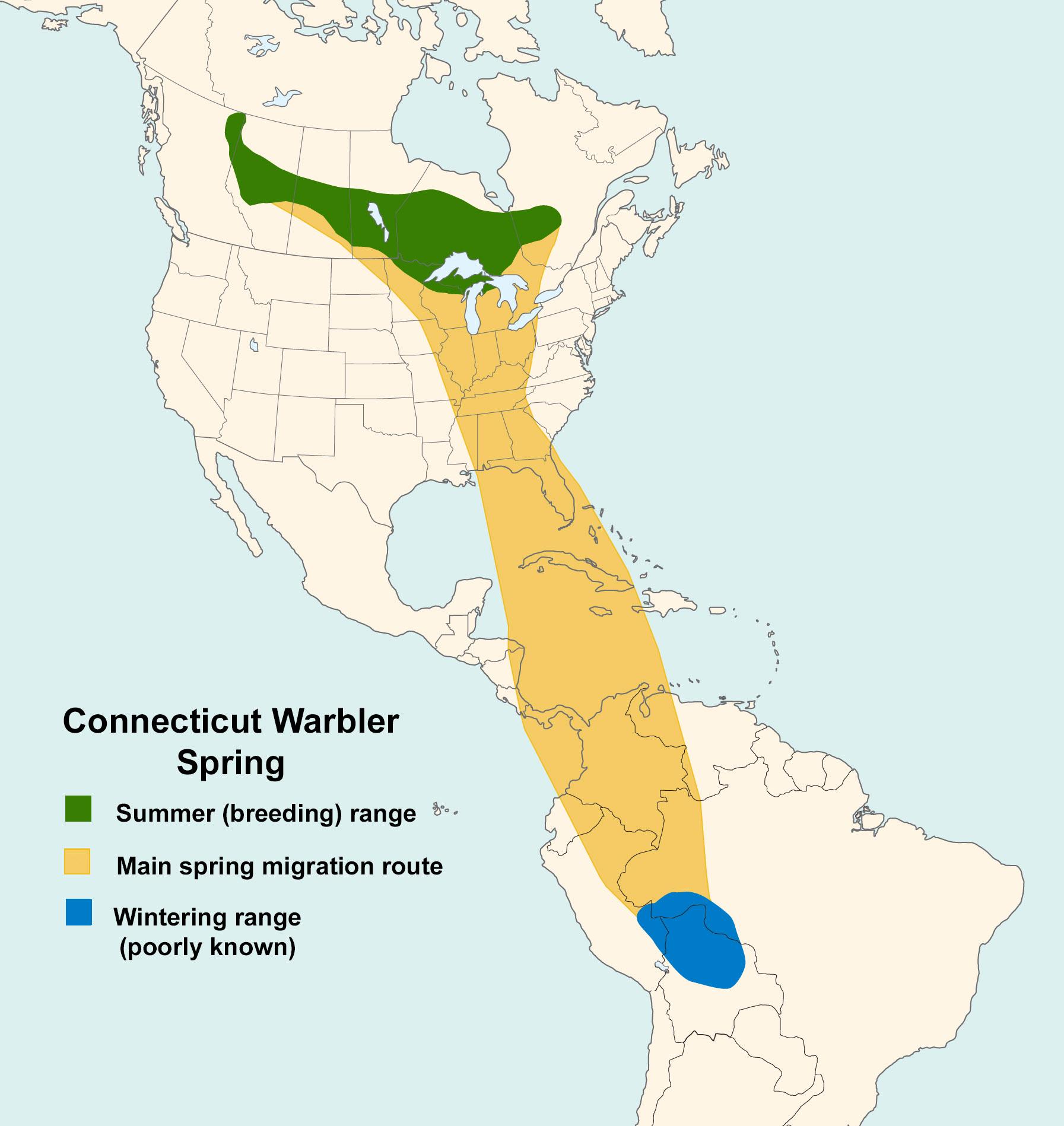 Mapa ilustrado que representa los patrones de migración de la curruca de Connecticut en primavera.