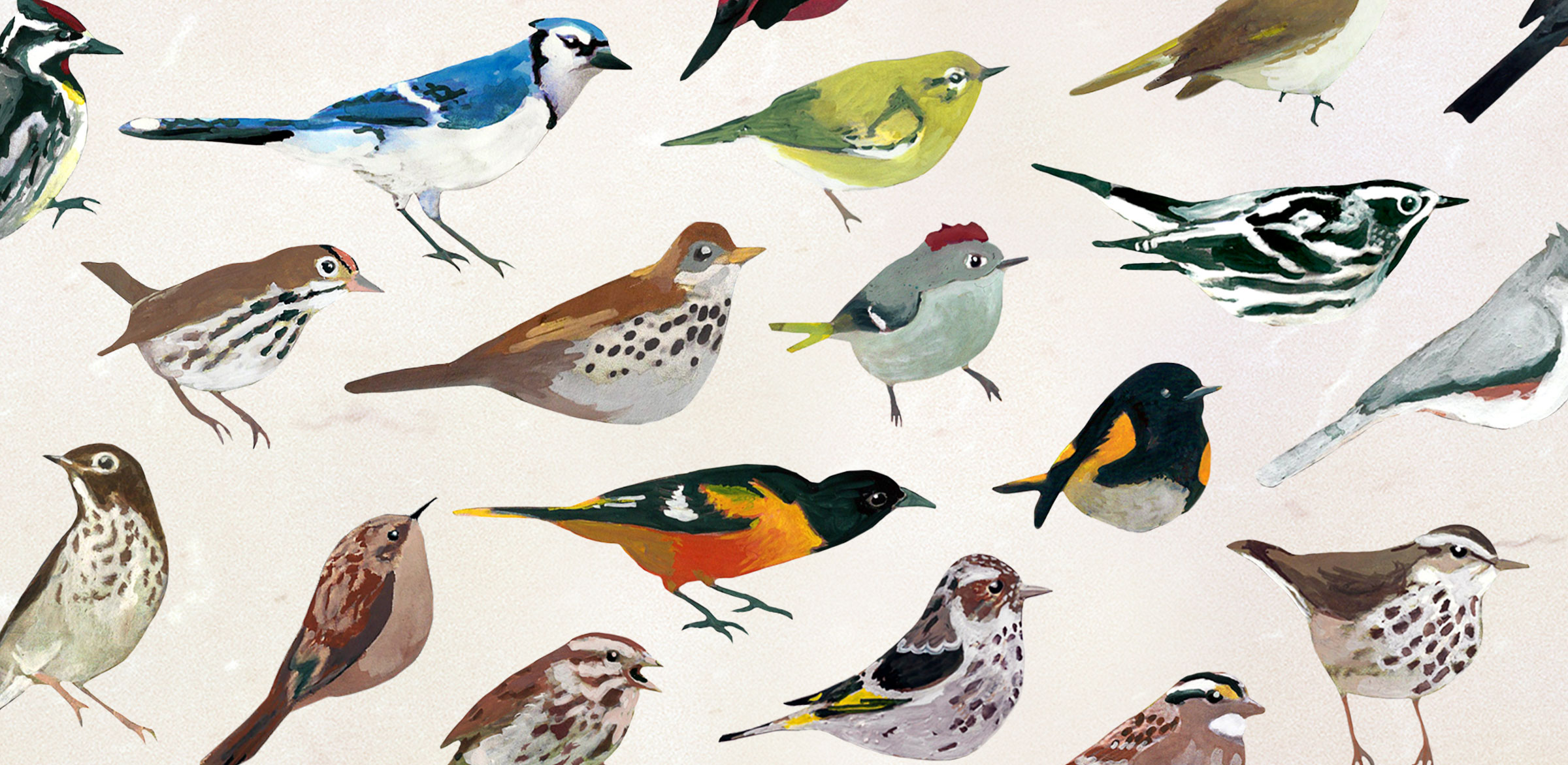 Why wake to a blaring alarm clock when birdsong is an option? Illustrations: Courtesy of Carnegie Museum of Natural History