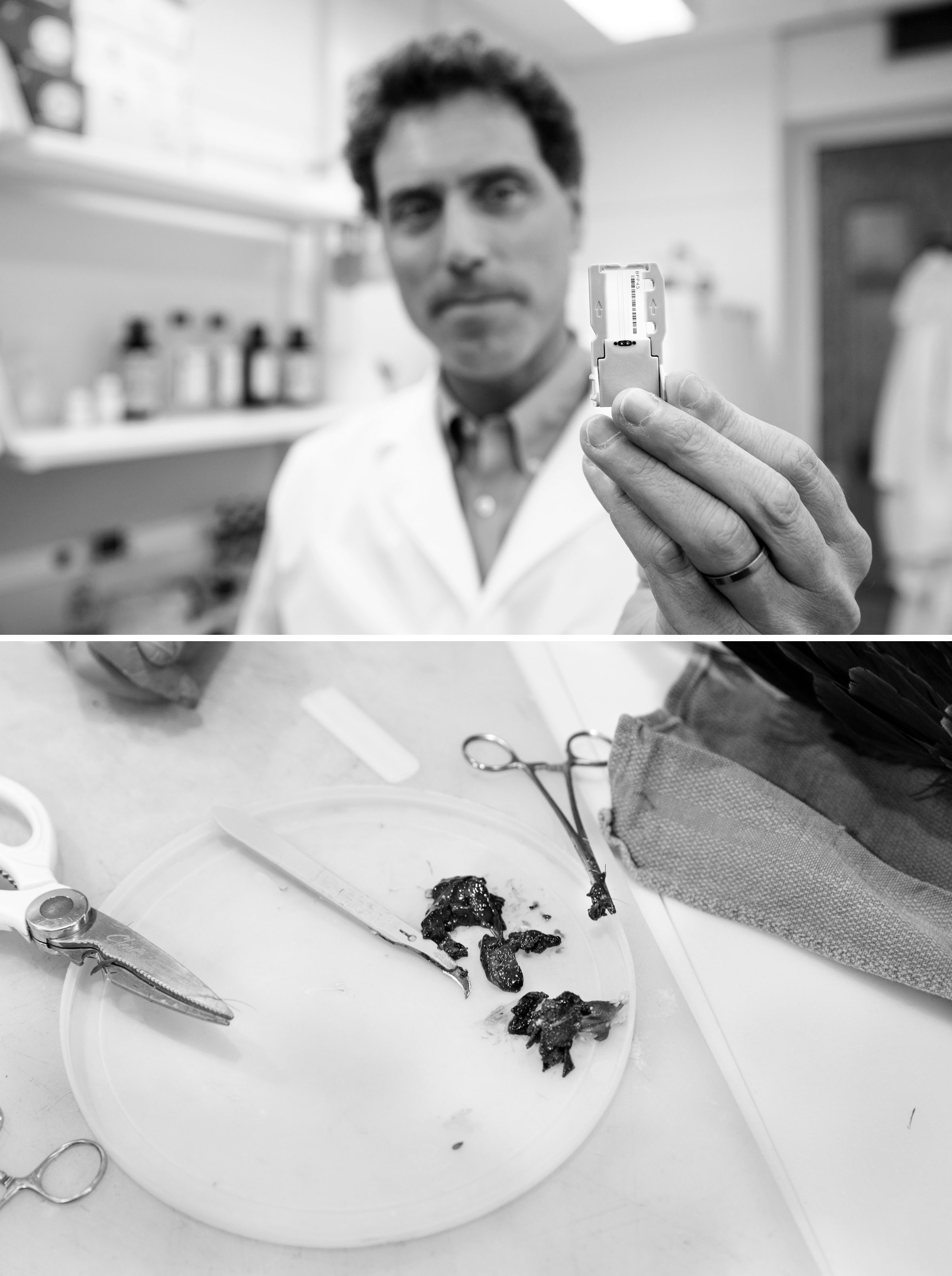 Tony Goldberg, top, is helping to crack the case by using advanced technology to analyze tissue samples from dead eagles. Photos: Tom Lynn