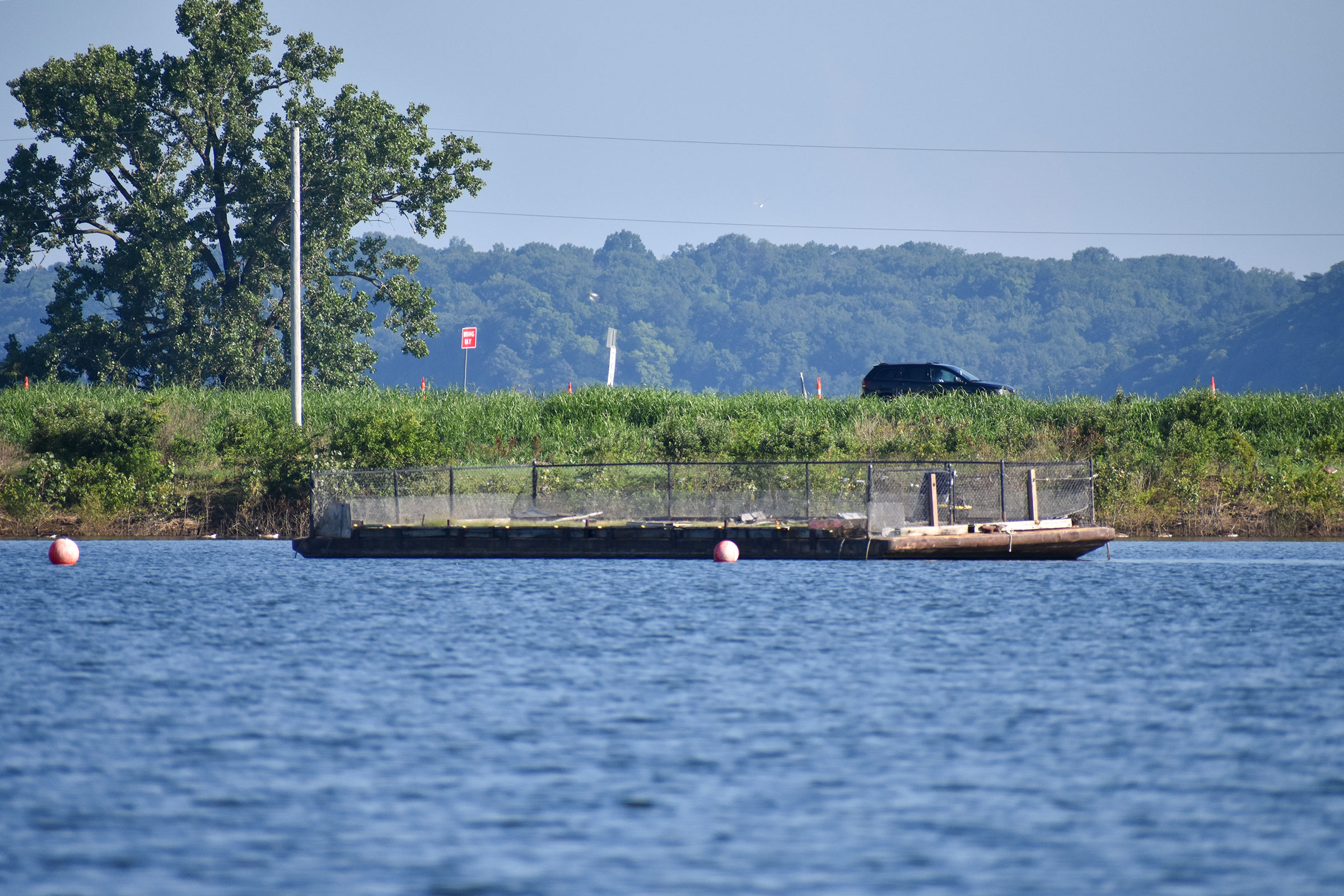 A nesting barge floats in a pond along the Mississippi River near St. Louis. The barge is a floating flat surface covered in sand with a one-meter fence to keep predators out. Its sole purpose is to serve as nesting habitat for birds. Tara Hohman
