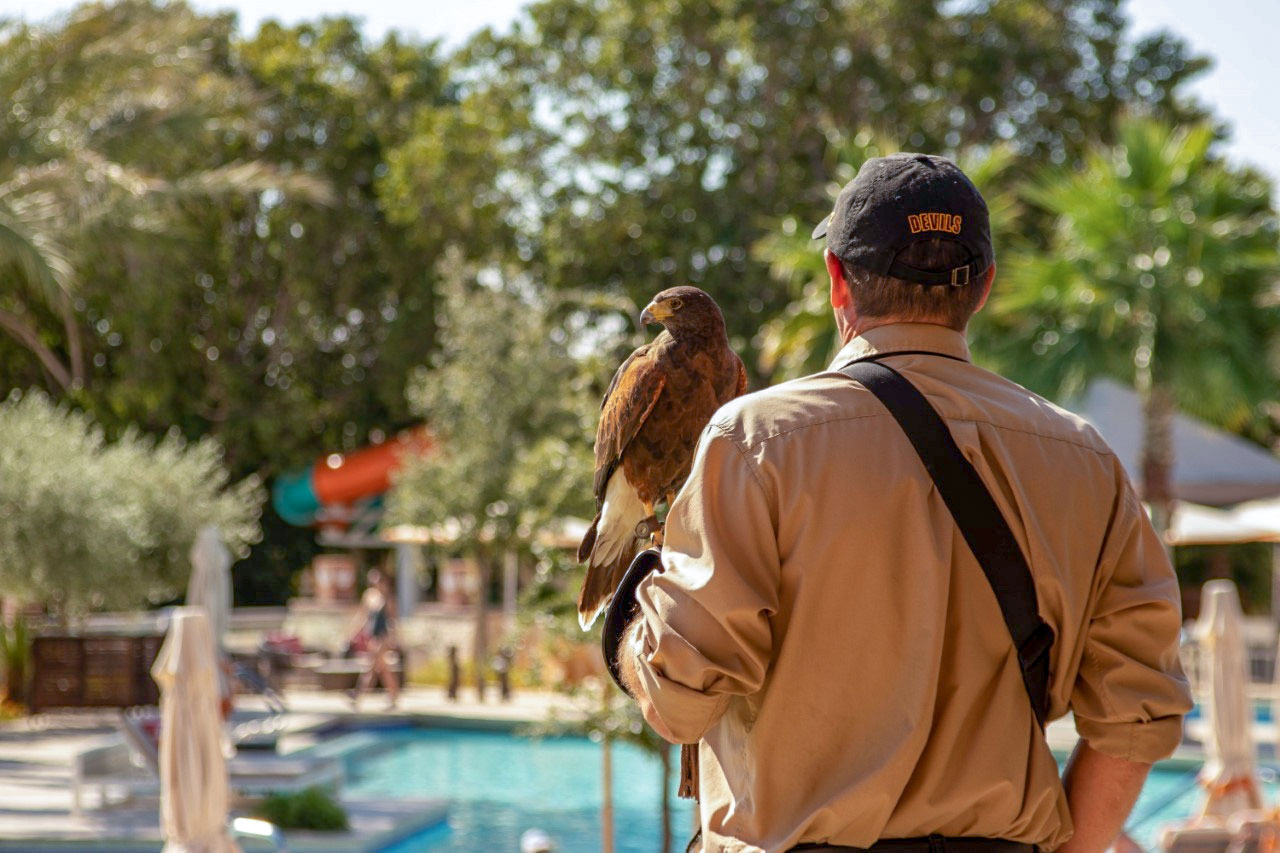 Falconer Shannon McQuerrey and Calvin are attractions for hotel guests, too. Shaena Montanari