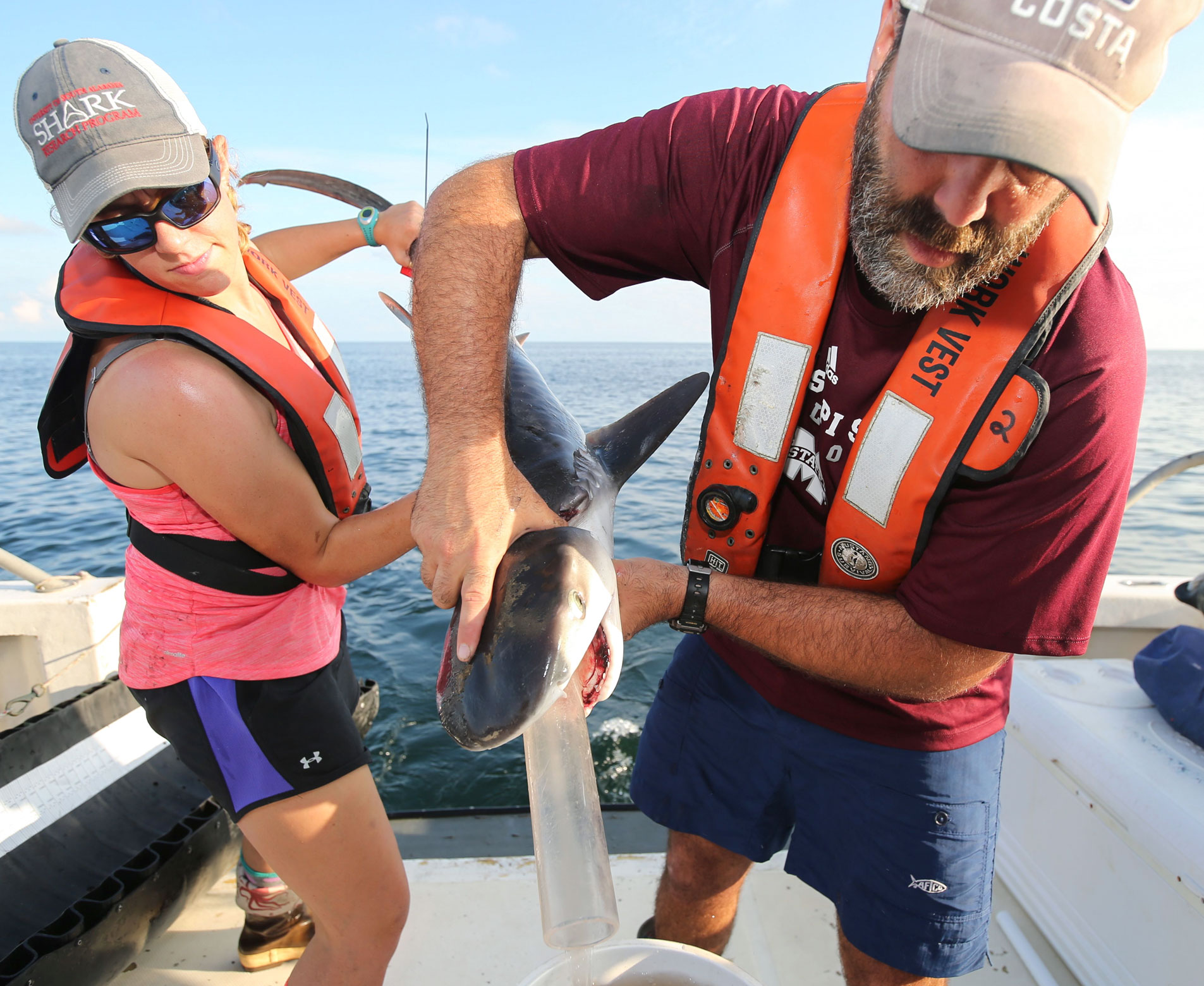 Marcus Drymon (right) and a colleague gather stomach contents from a young tiger shark in the Gulf of Mexico. David Hay Jones