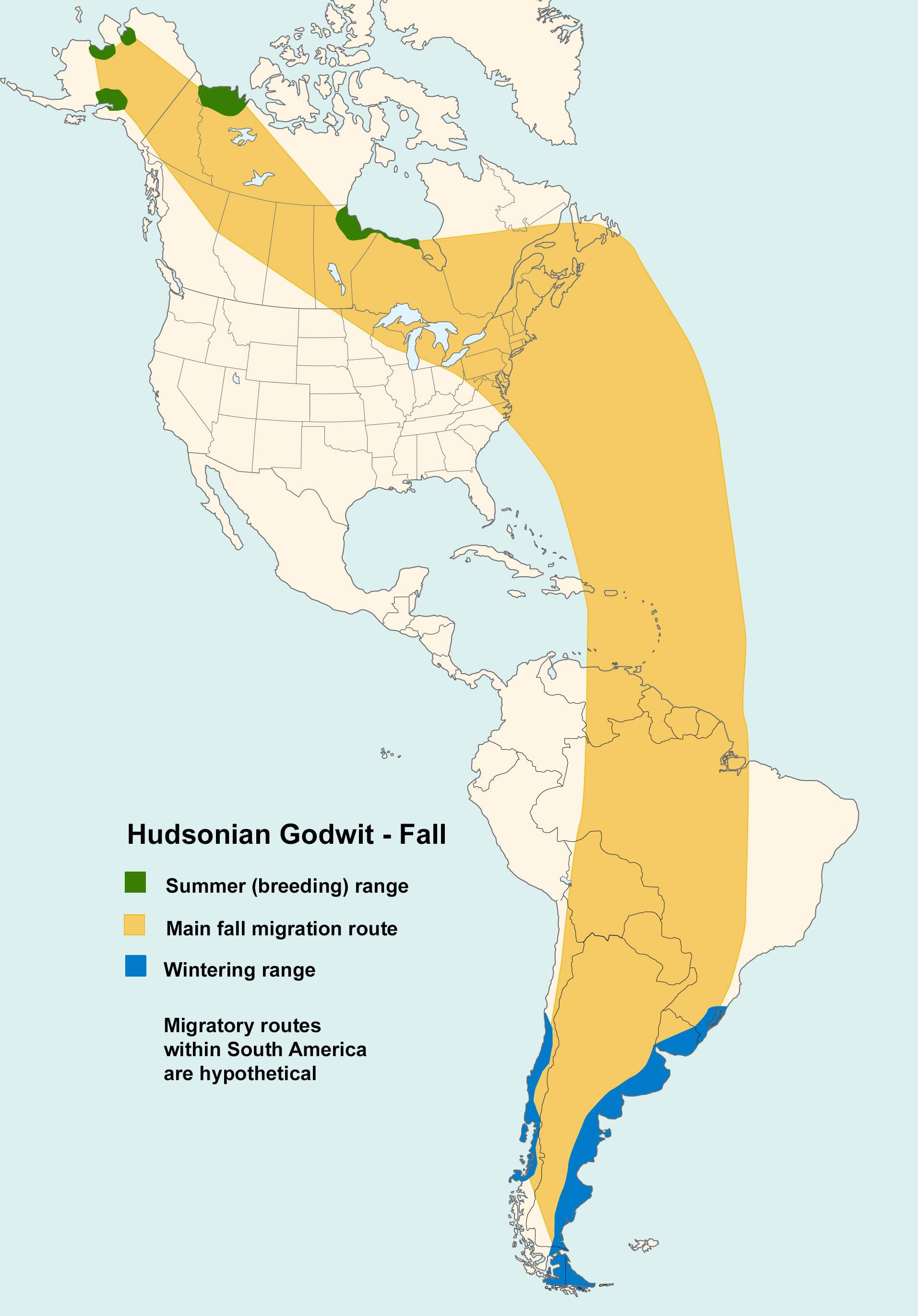 Mapa ilustrado que muestra los patrones de migración Hudsonian Godwit en otoño.