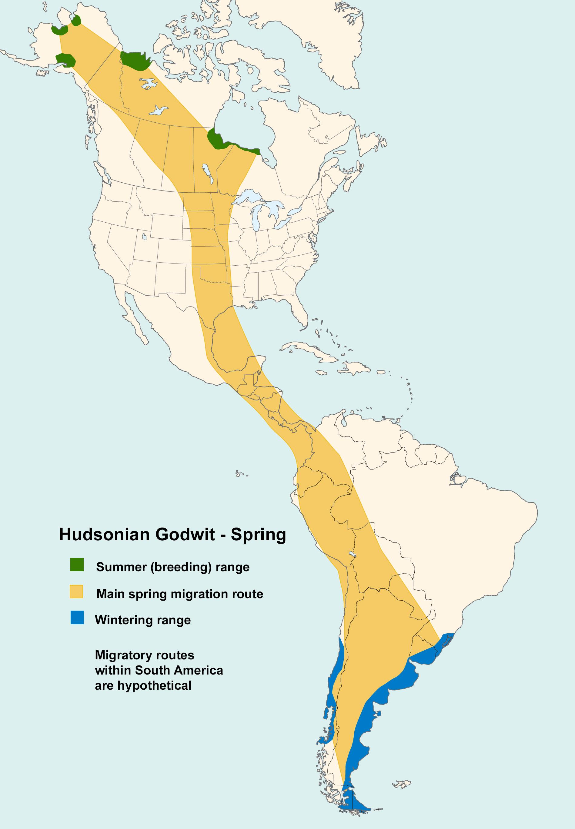 Mapa ilustrado que representa los patrones de migración de Godwit Hudsonian en primavera.
