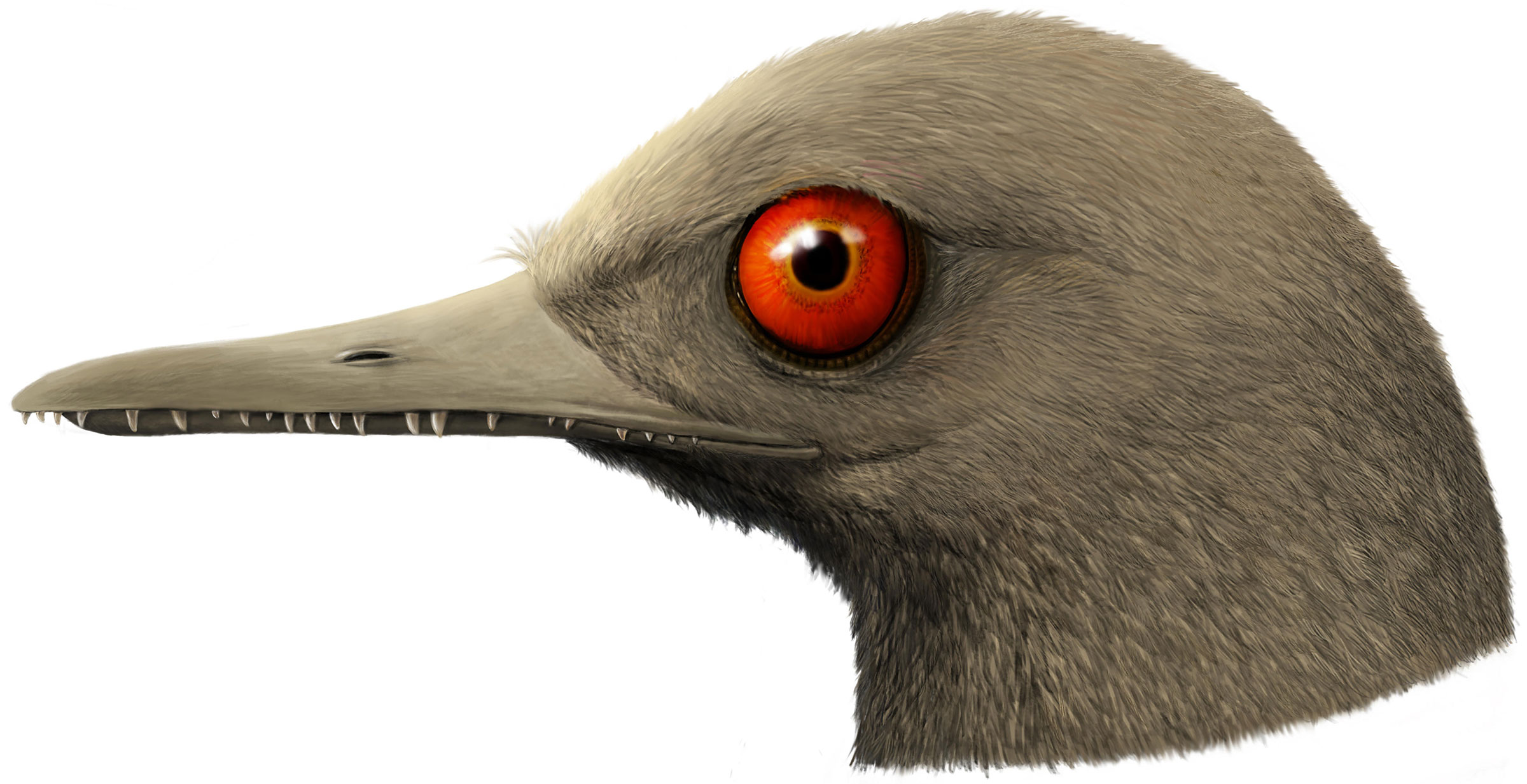 An artistic rendering of Oculudentavis, imagining what it looked like while alive 99 million years ago. Han Zhixin