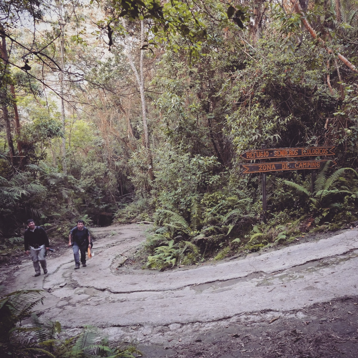 Juan Pablo and Giovanni hike up the steep track in the Chicaque Reserve. Noah Strycker