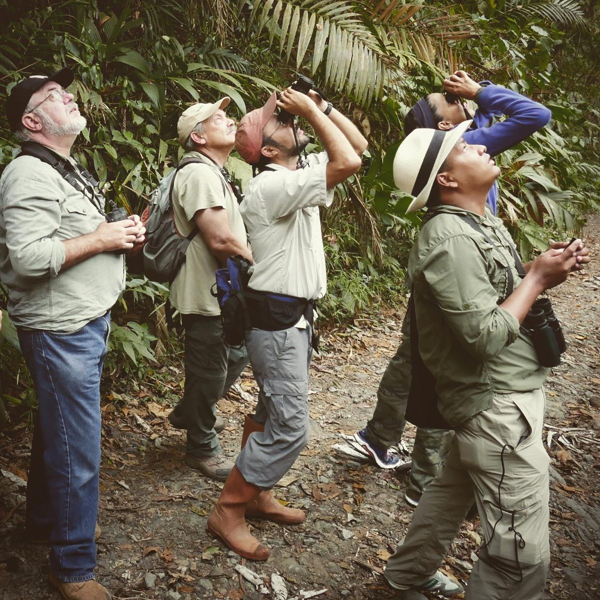 Birders from the Panama Audubon Society spot a White-tipped Quetzal at El Dorado, Colombia. Noah Strycker