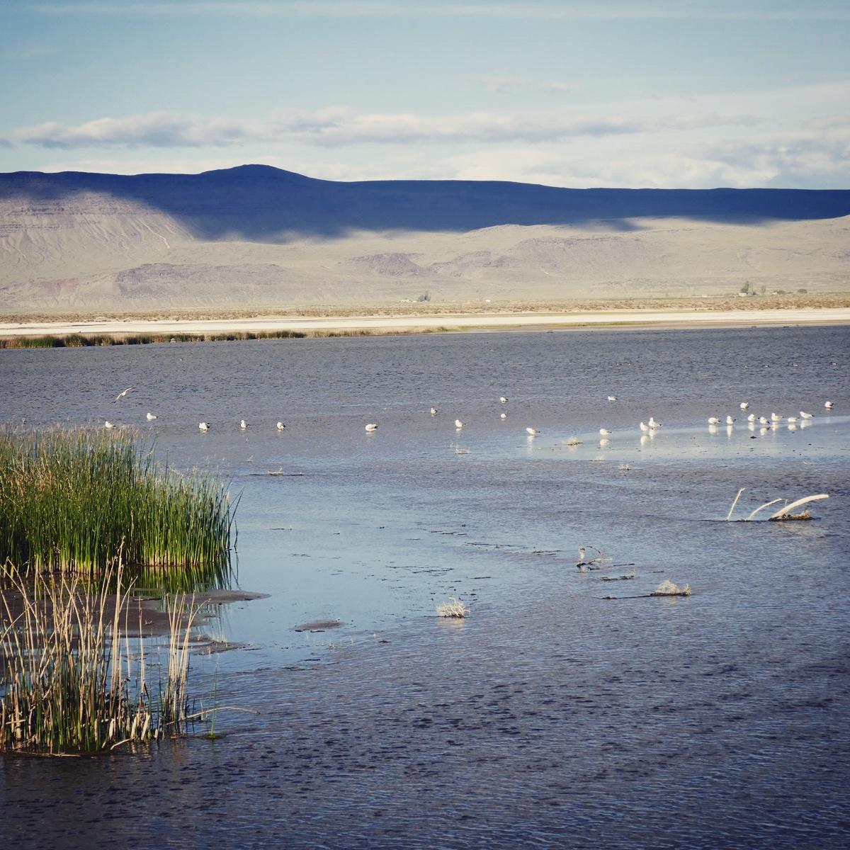 Summer Lake, in eastern Oregon, is an oasis for birds in the desert. Noah Strycker