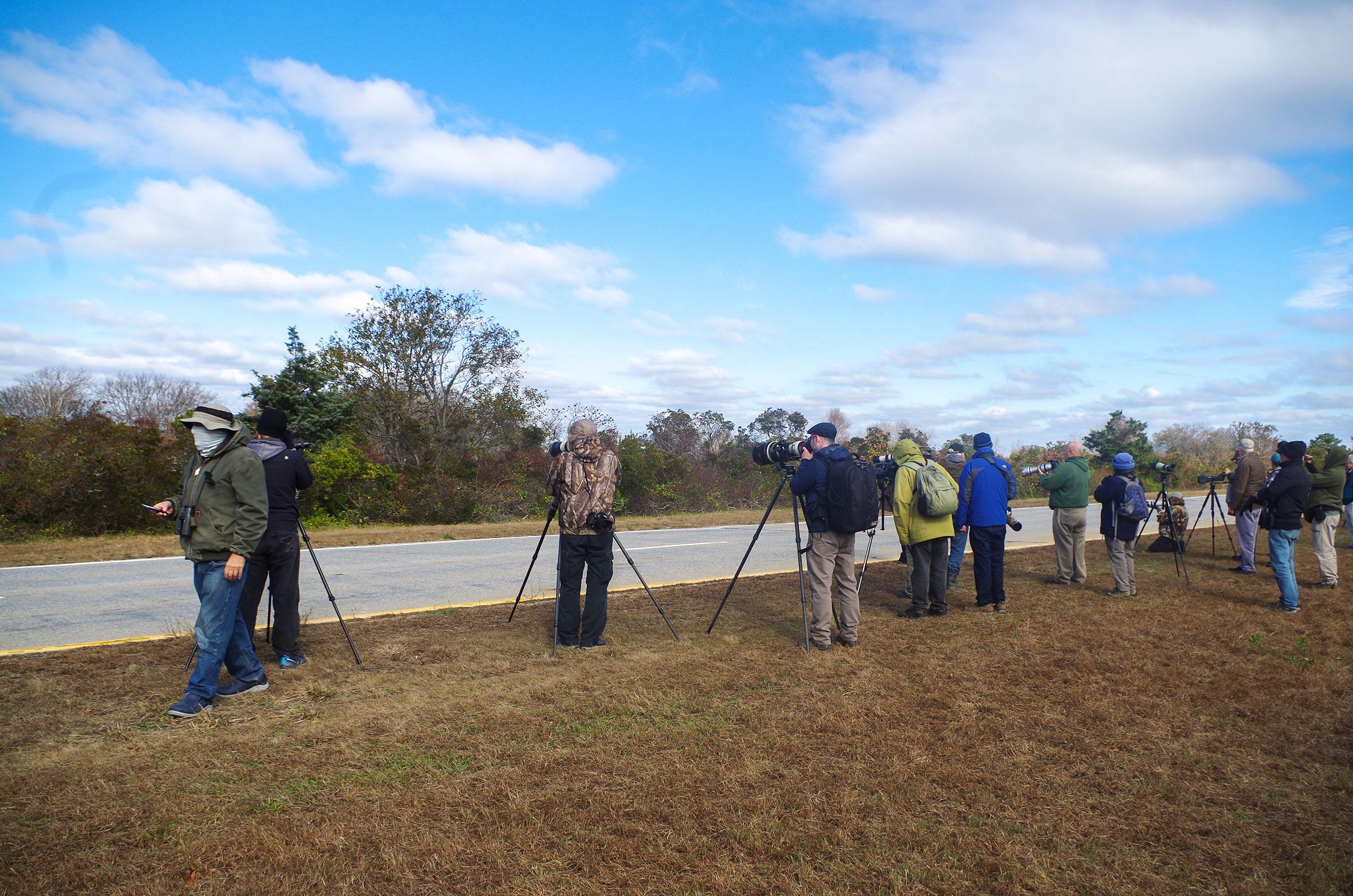 Spotting scopes line the parkway to view the vagrant Corn Crake. Joe Trezza