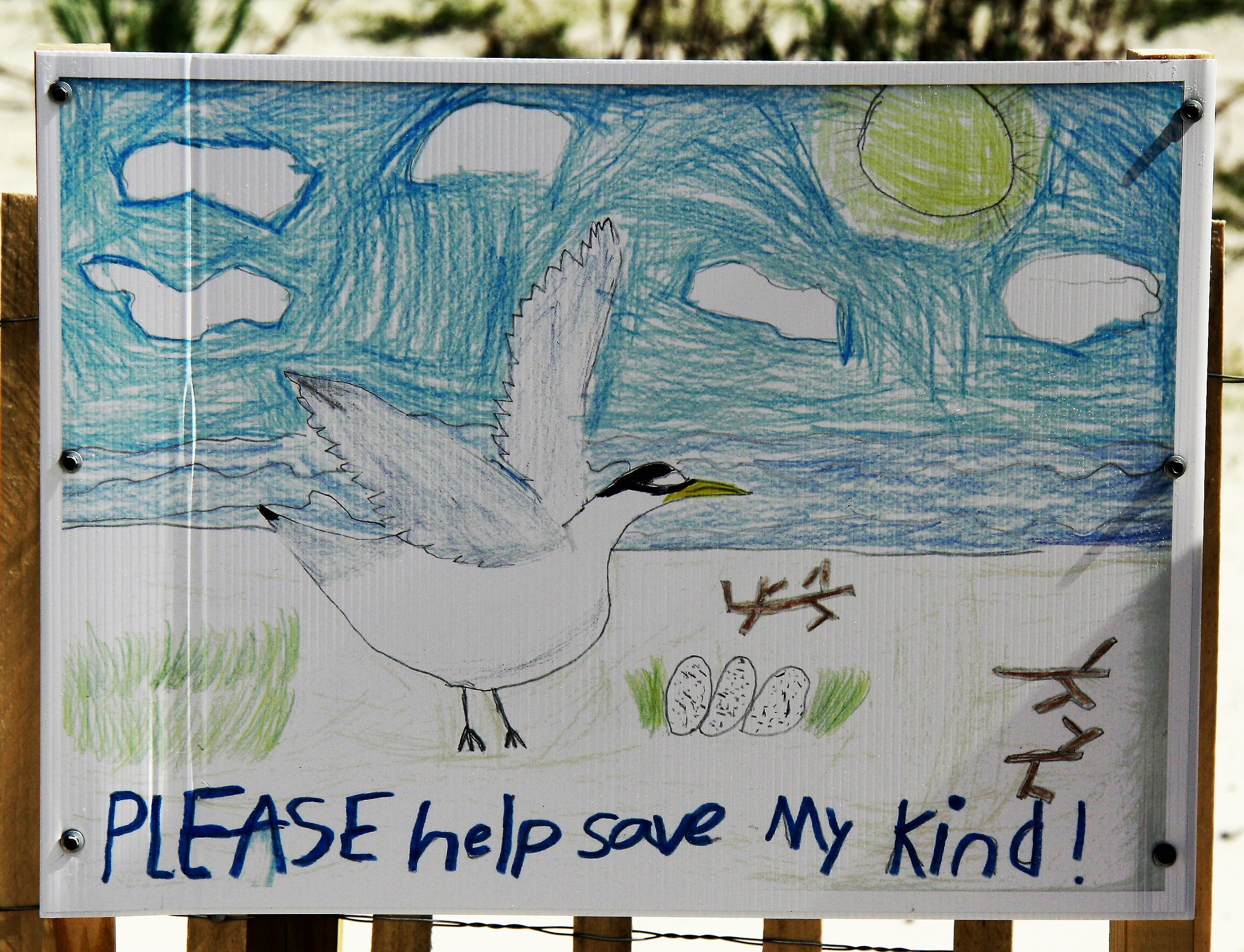 Audubon works with kids in local schools to create signs that alert beachgoers when nesting shorebirds are present. Mary Cowan/Audubon Mississippi