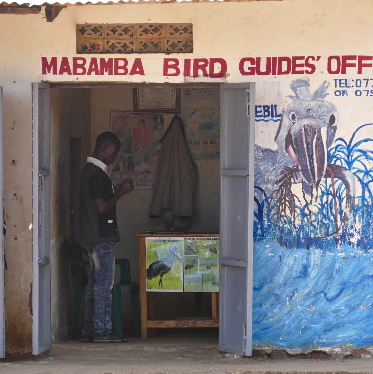 The boat operator's office at Mabamba features Shoebill artwork. The boat operator's office at Mabamba features Shoebill artwork. Noah Strycker