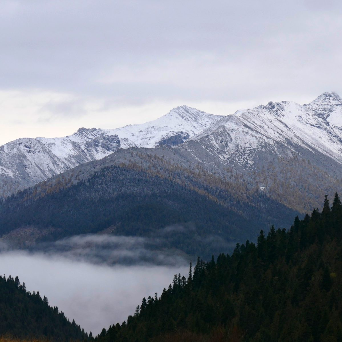 Snowy peaks are visible from Mengbi Shan Pass. Noah Strycker