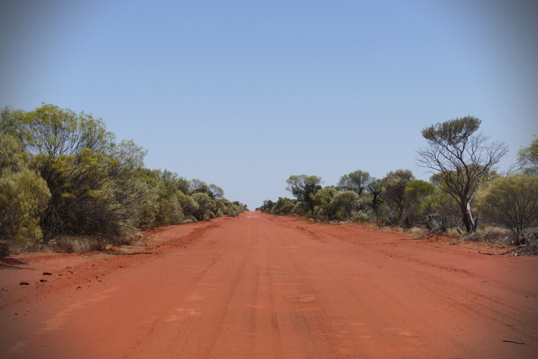 Green trees and red roads permeate the Australian interior. Noah Strycker