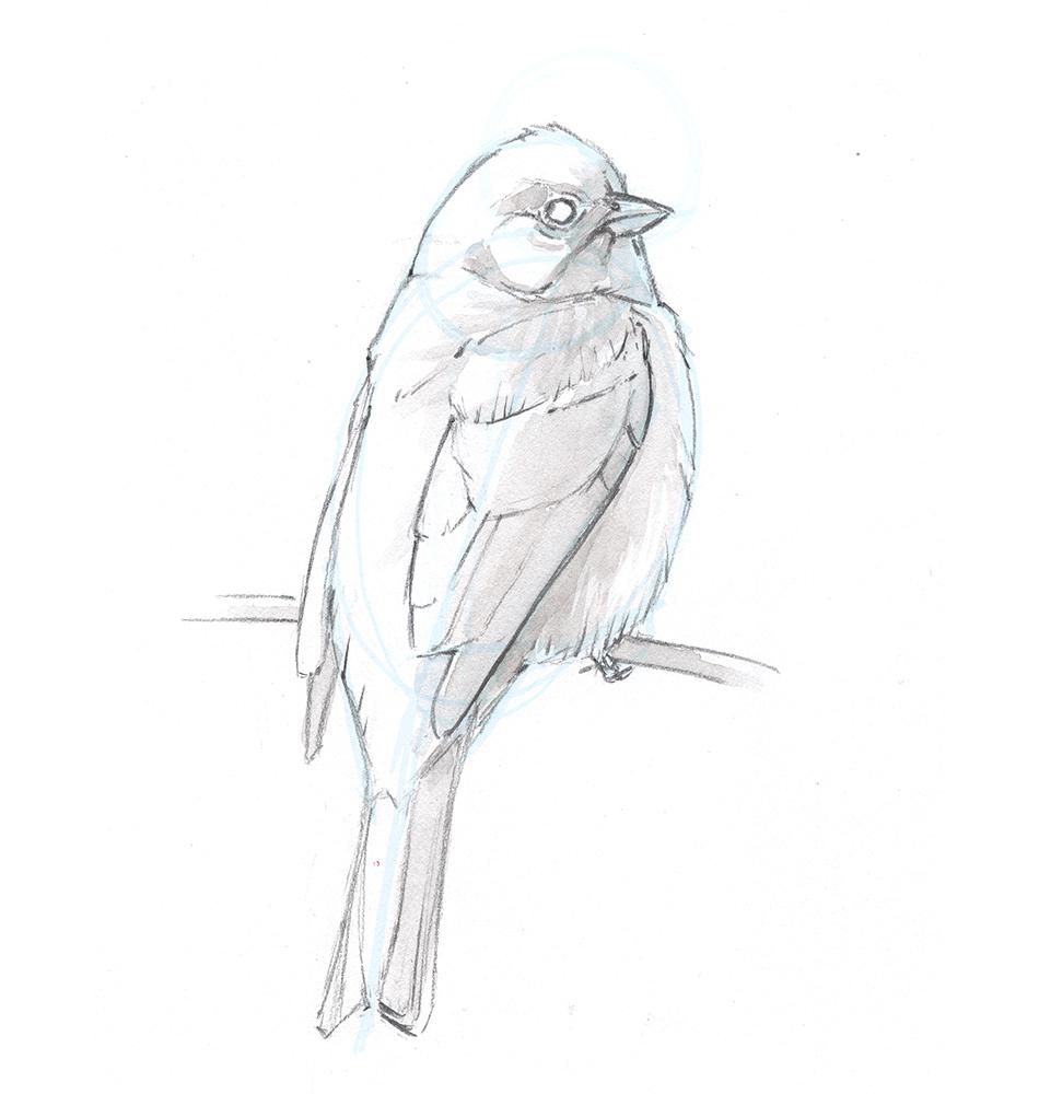 Illustration: John Muir Laws
